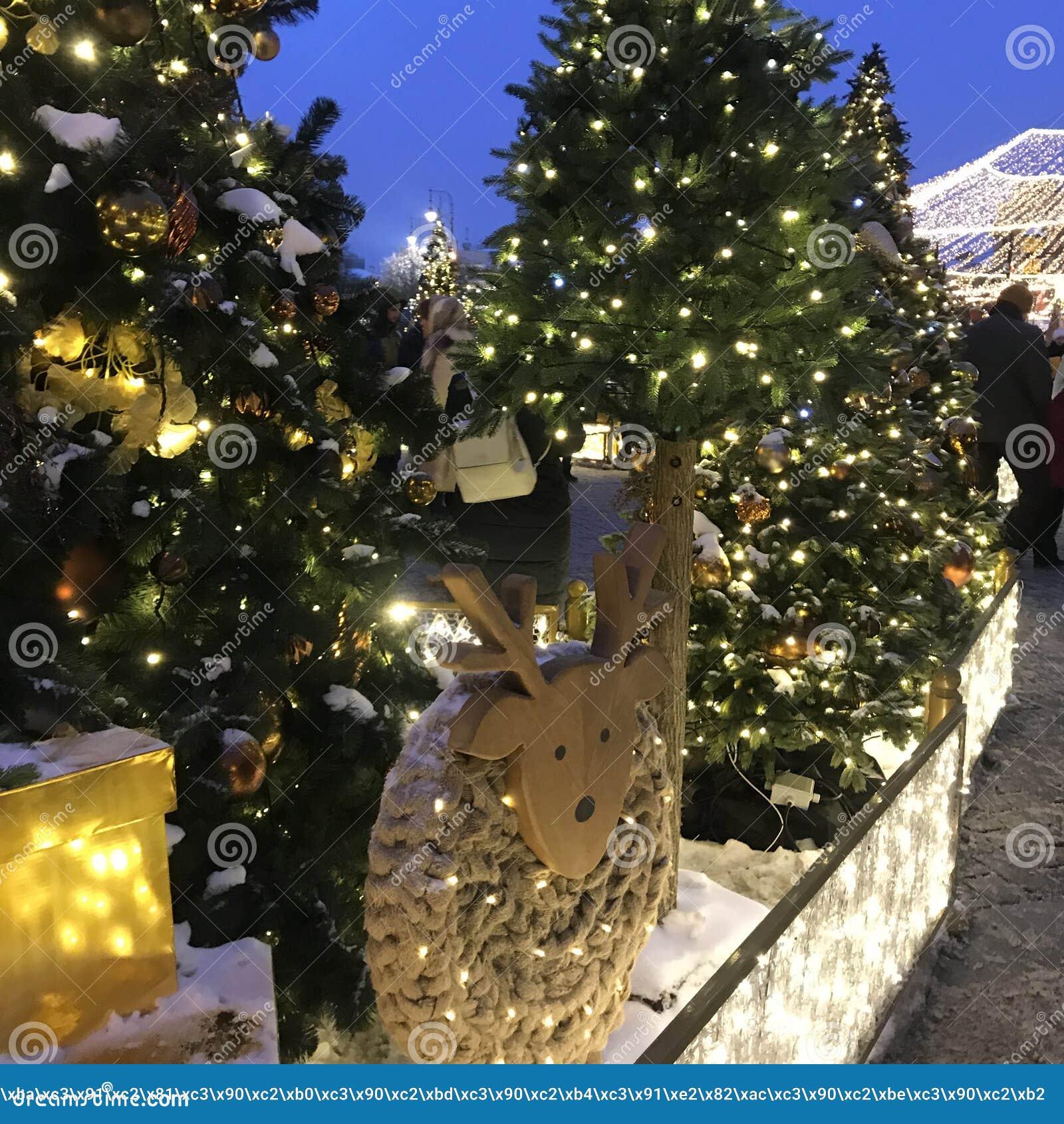 Kerstbomen in park