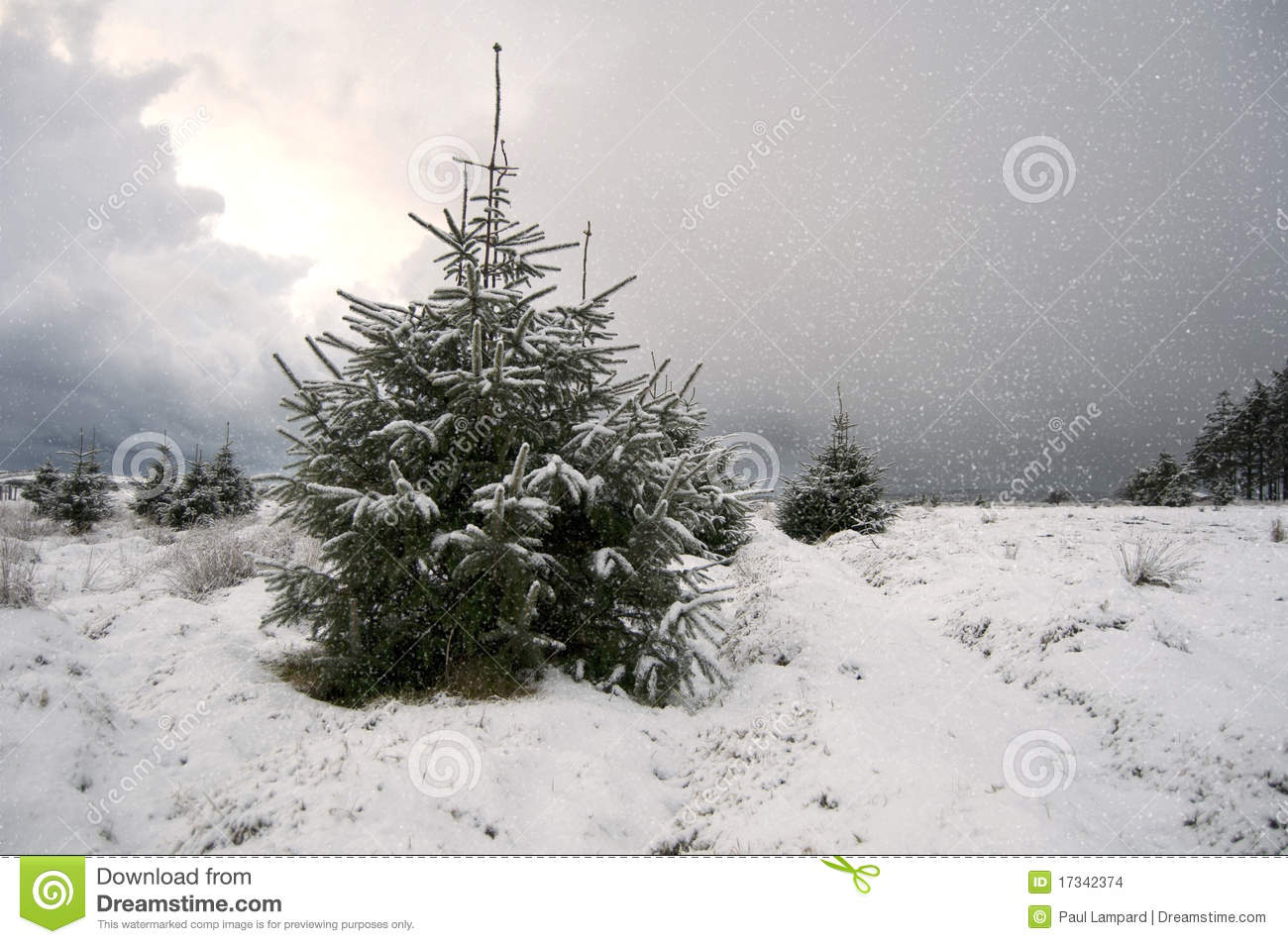 Christmas Tree With Snow Falling On It