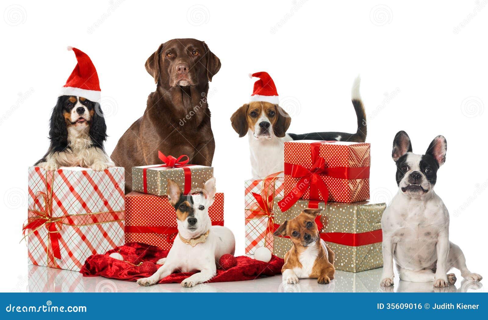 Kerstmishonden