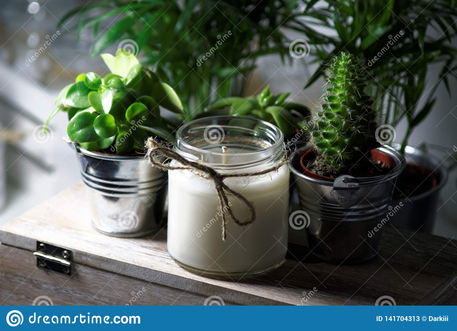 Kerze zwischen Succulents