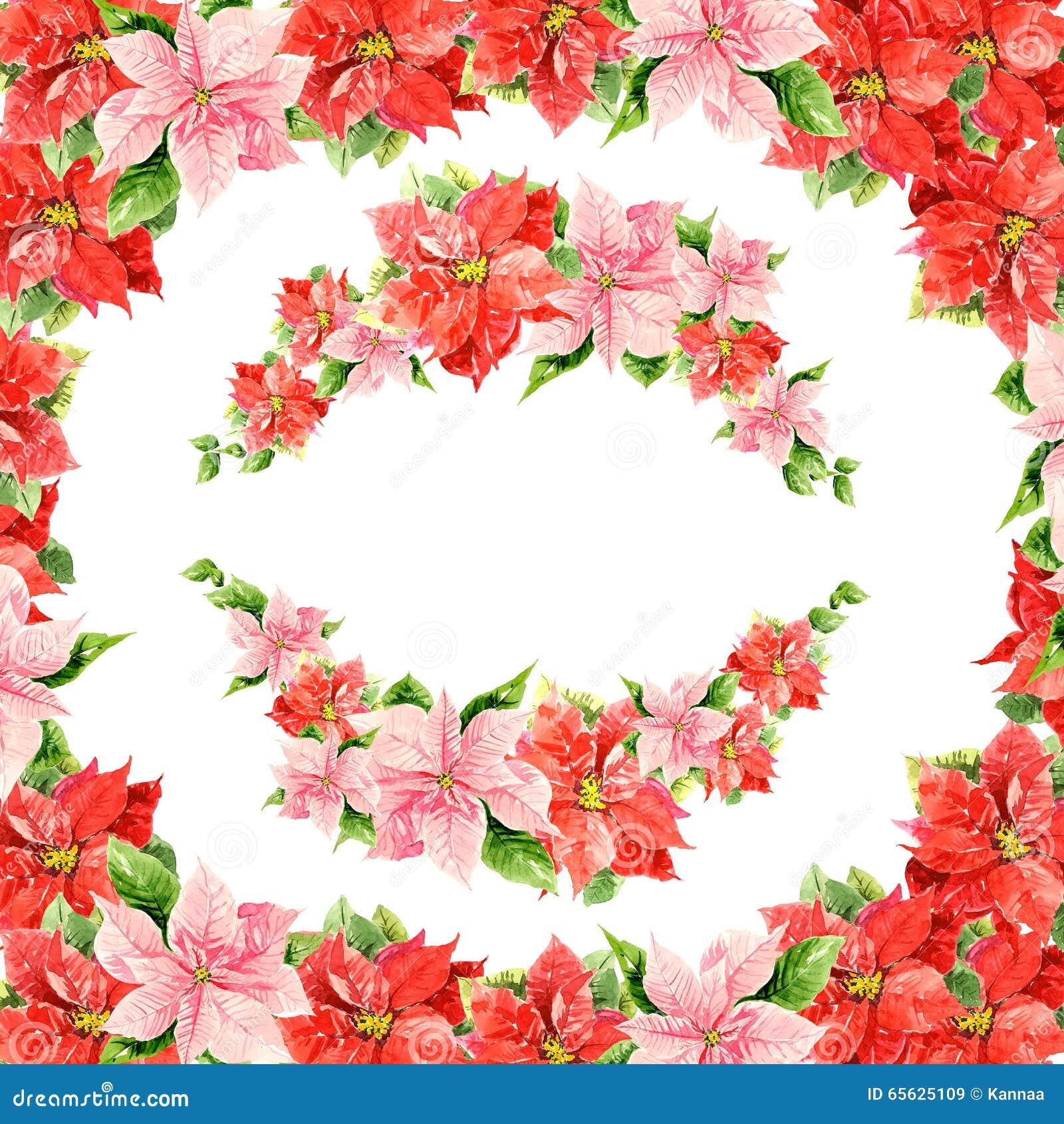 Ketmies roses et rouges de belle aquarelle sur le fond blanc