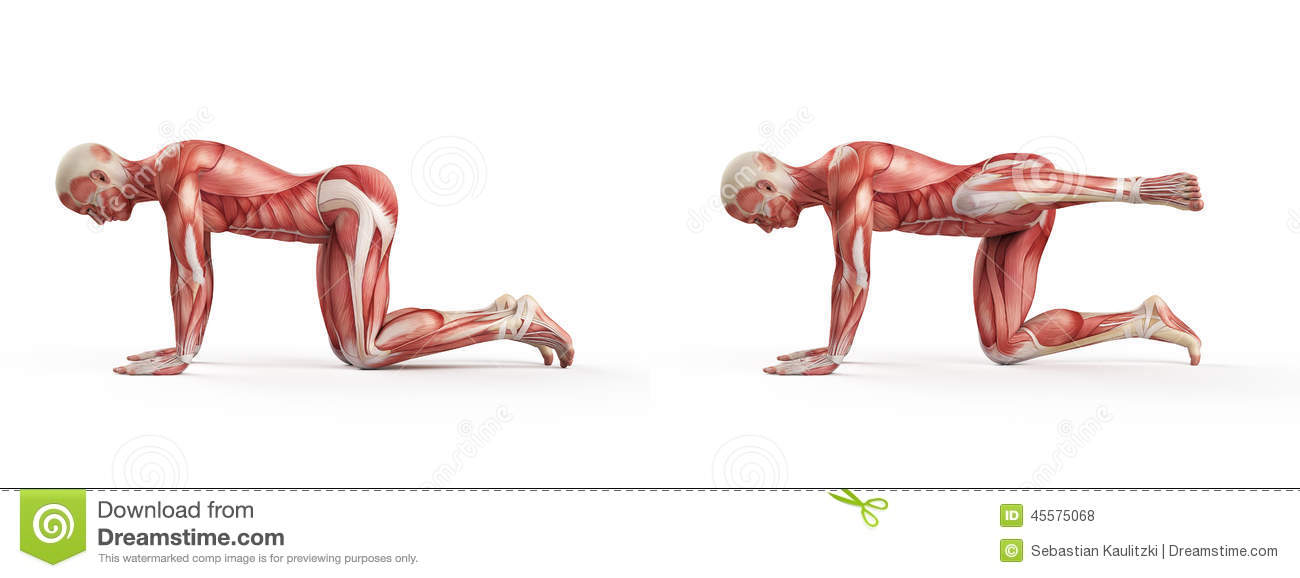 Kettlebell Exercise Stock Illustration - Image: 45575068