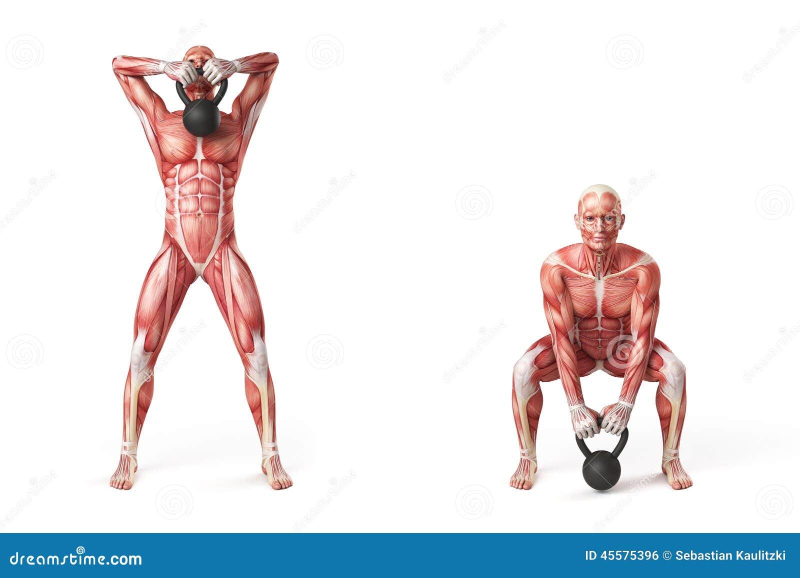 Kettlebell Exercise Stock Illustration Image 45575396