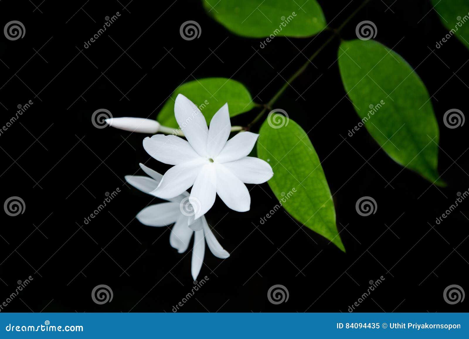 Keucht weiße Blume des Baums