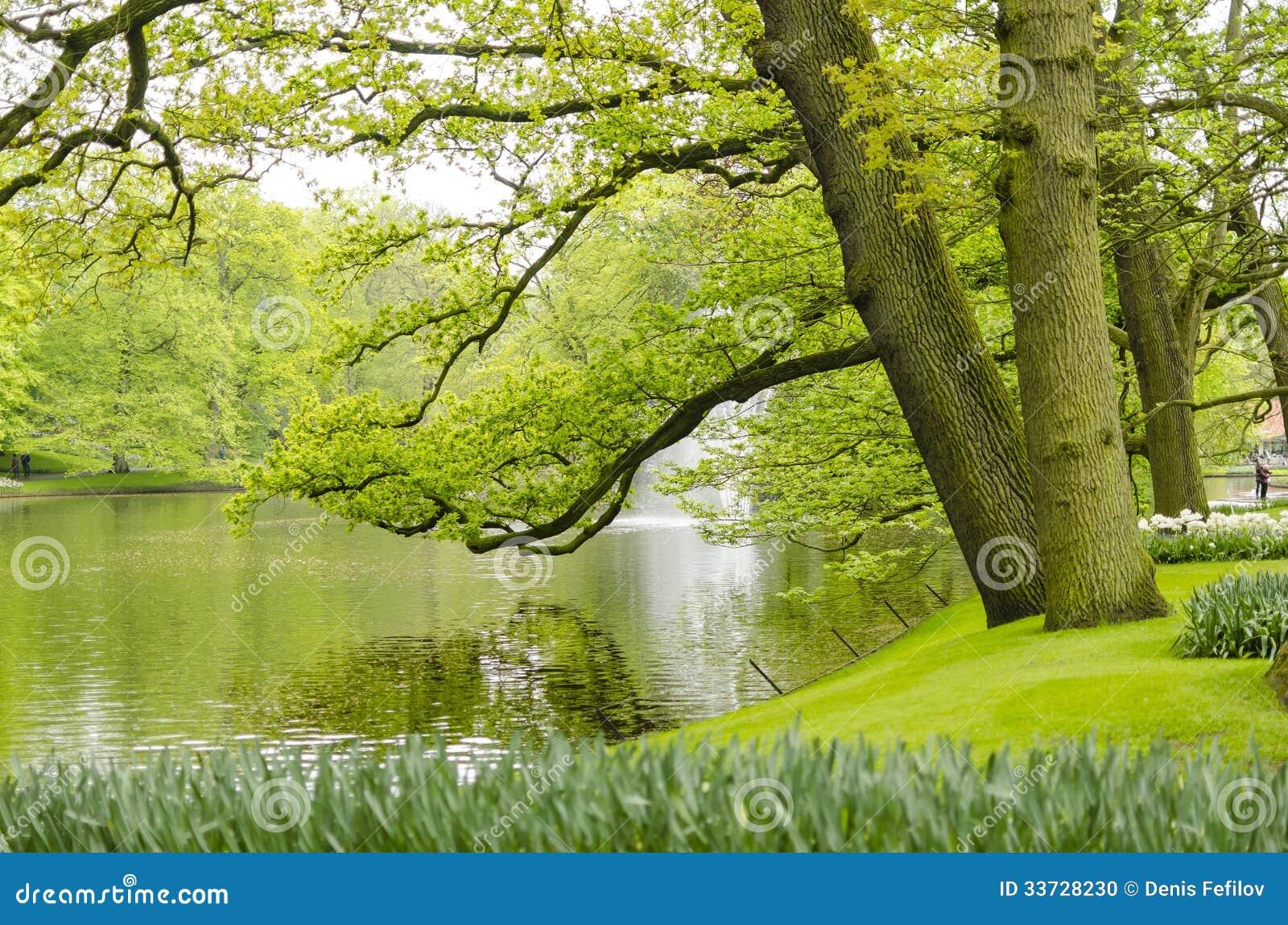 Зеленые сады весны в Keukenhof, Голландии