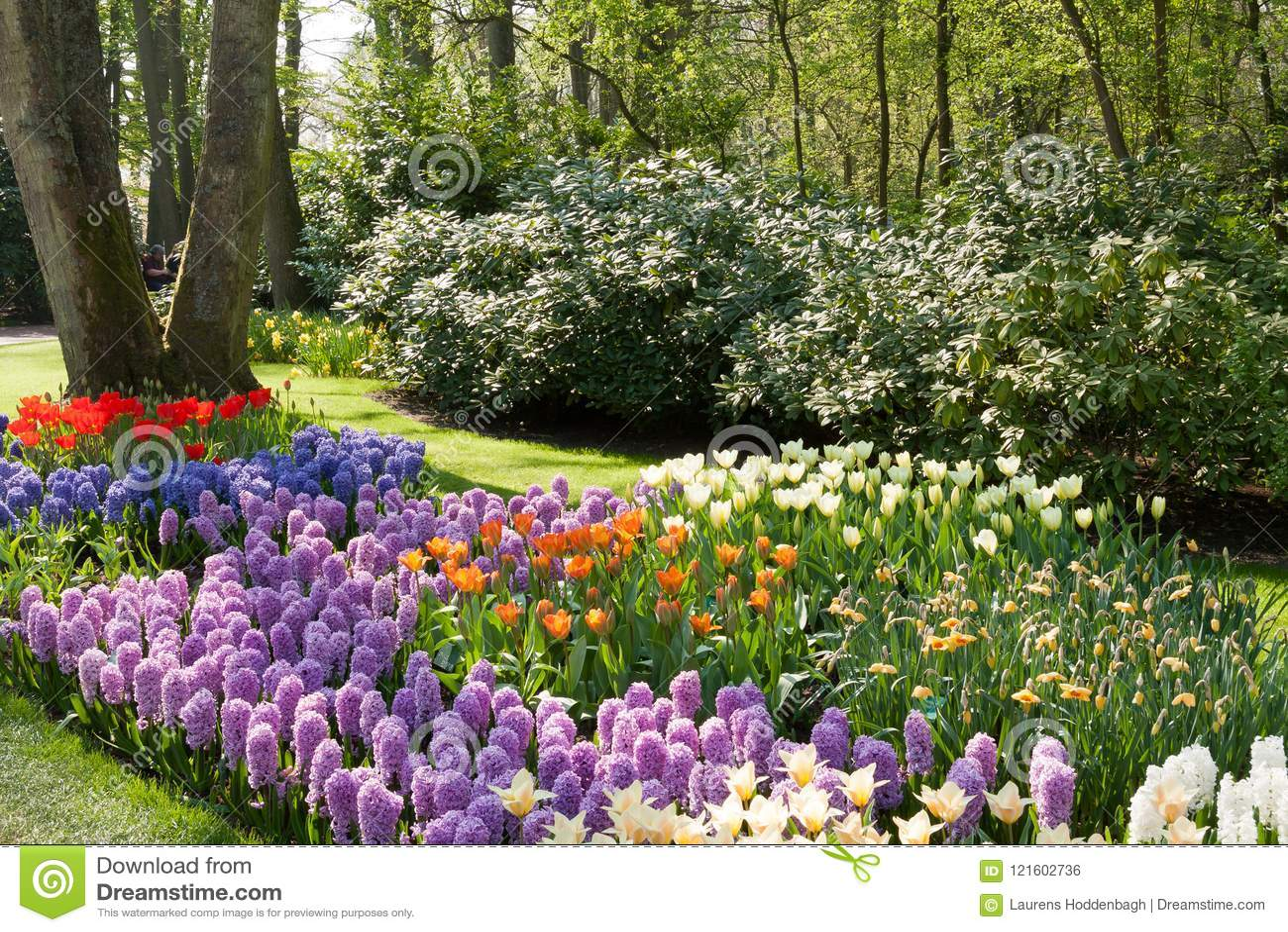 The Keukenhof, Dutch Public Spring Flowers Garden Stock