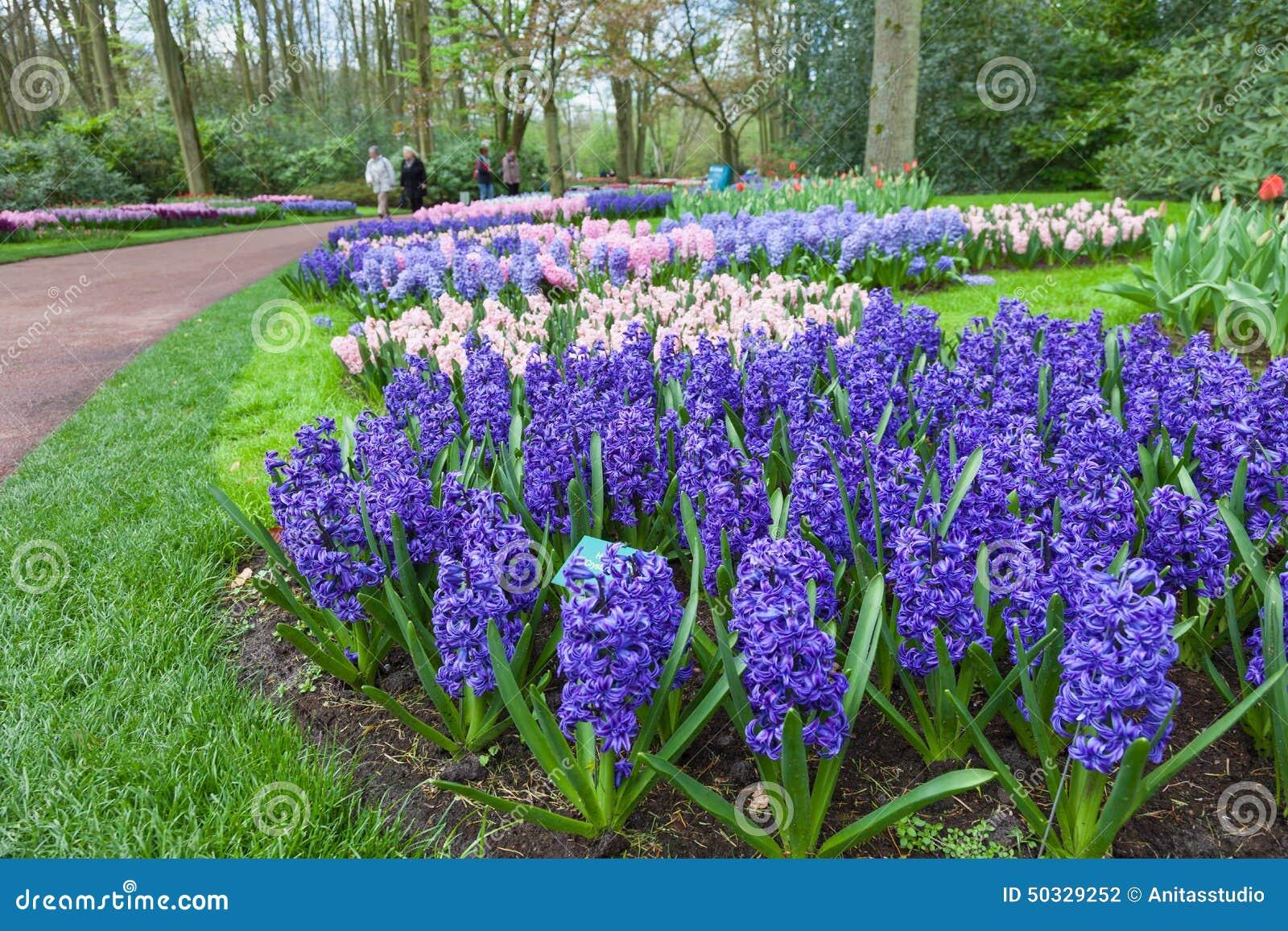 KEUKENHOF-TRÄDGÅRD, NEDERLÄNDERNA - APRIL 08: Keukenhof är världens den största blommaträdgården med 7 miljon blommakulor på ett