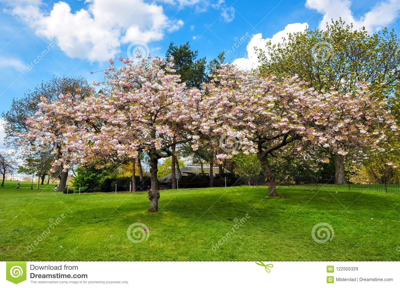 Kew植物园在春天,伦敦,英国