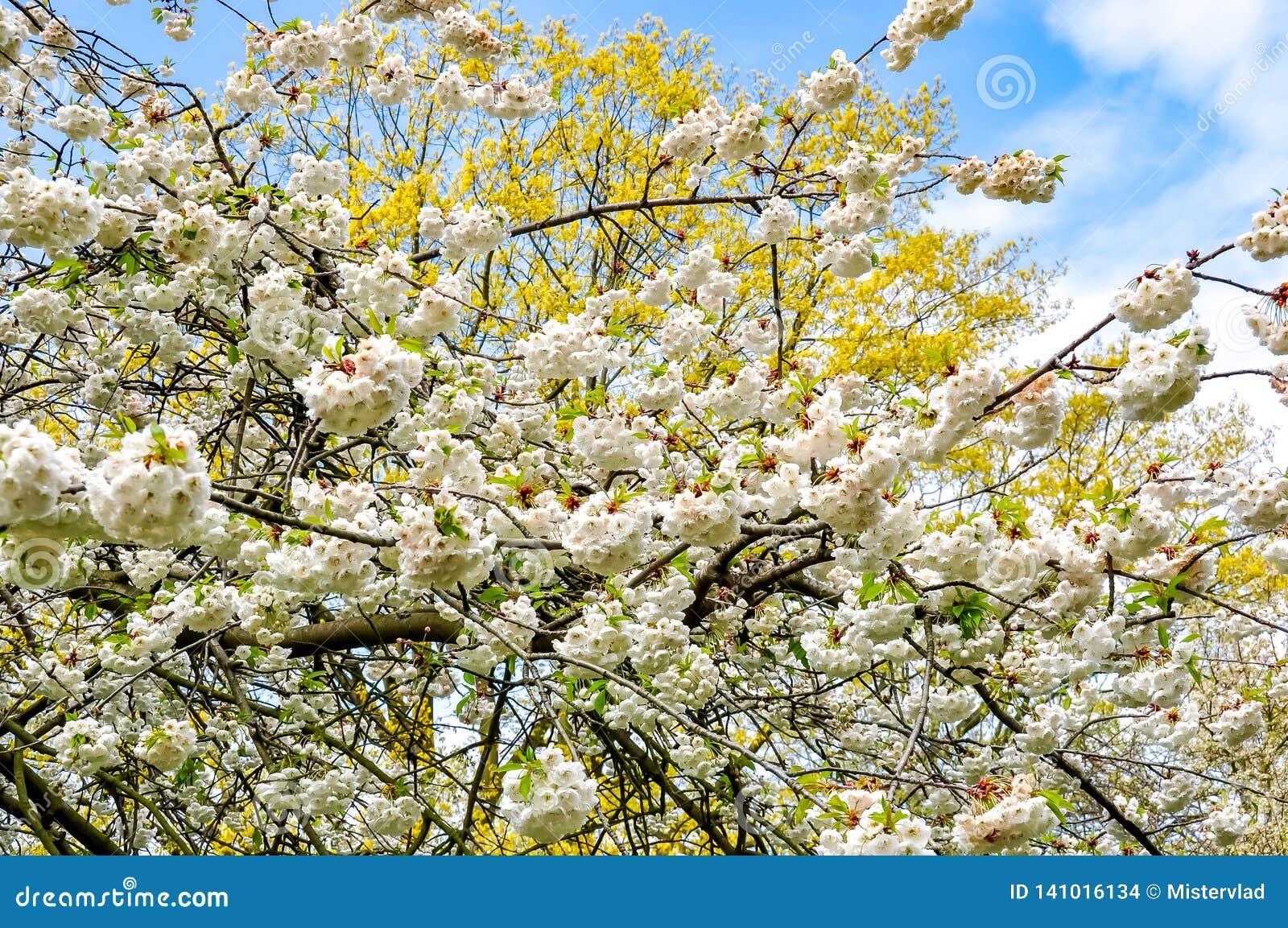 Kew botanische tuin in de lente, Londen, het Verenigd Koninkrijk
