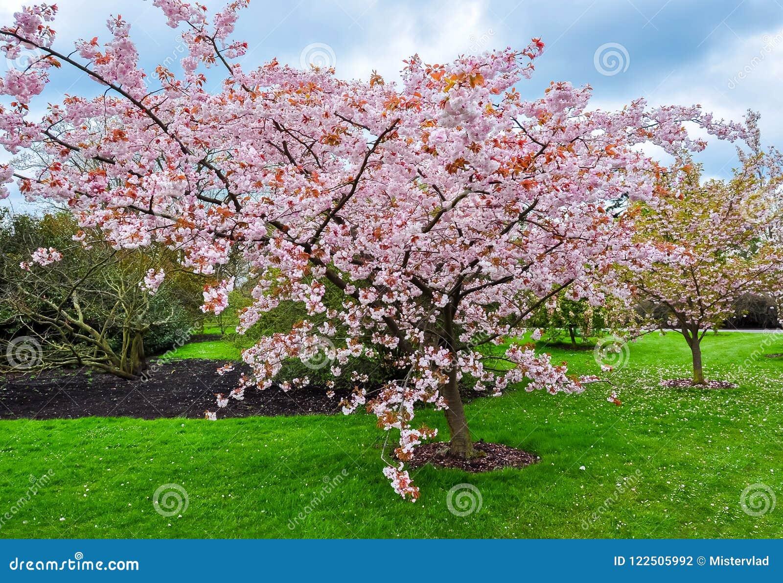 Kew botanisk trädgård i våren, London, Förenade kungariket