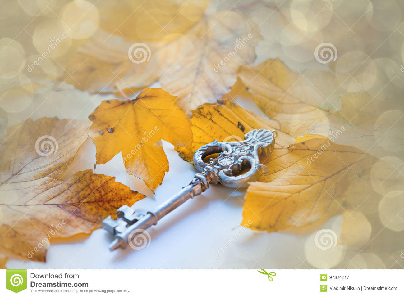 Key Maple Stock Images - Download 535 Royalty Free Photos