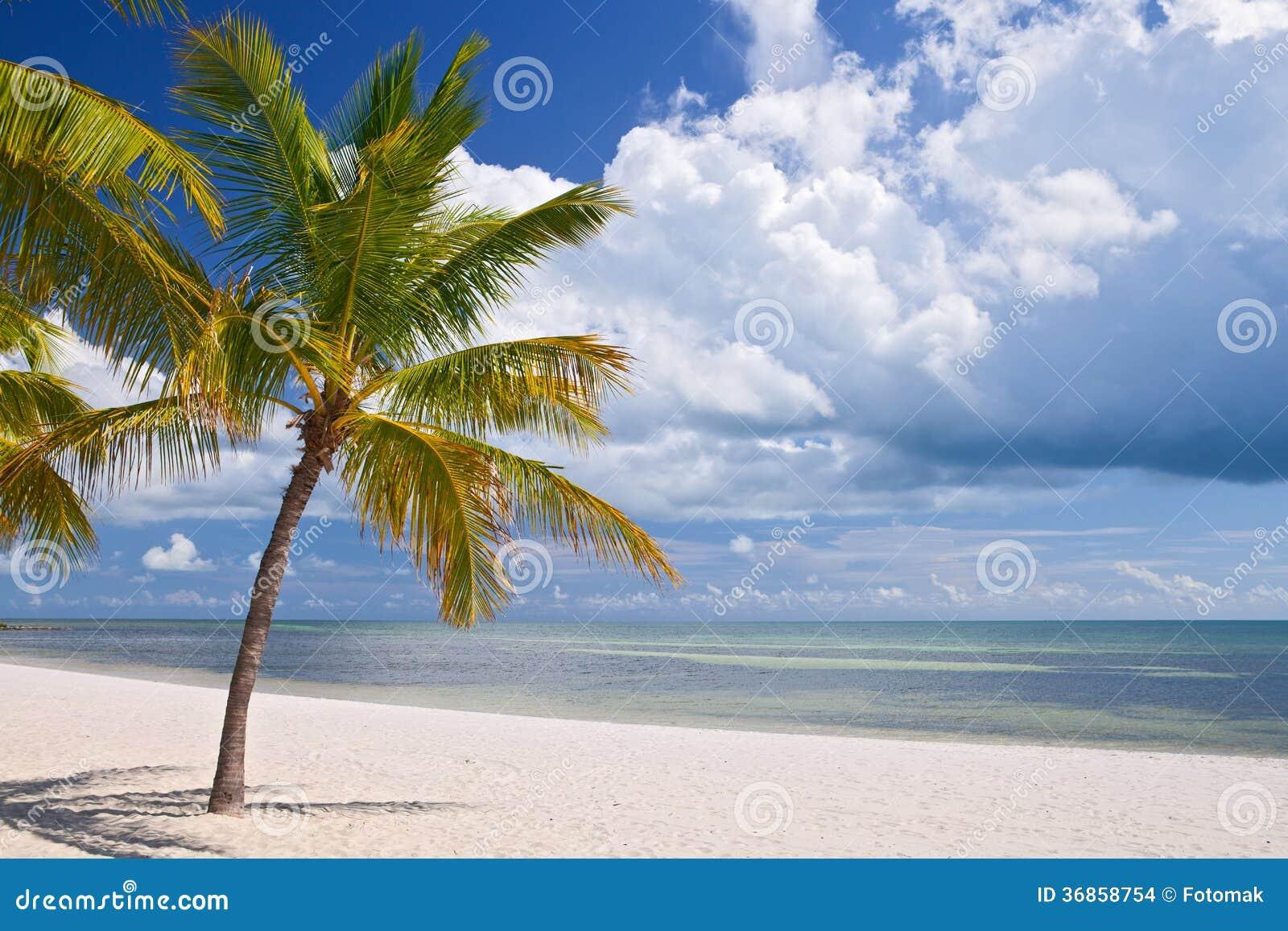 Key West Florida Beautiful Summer Beach Landscape Stock