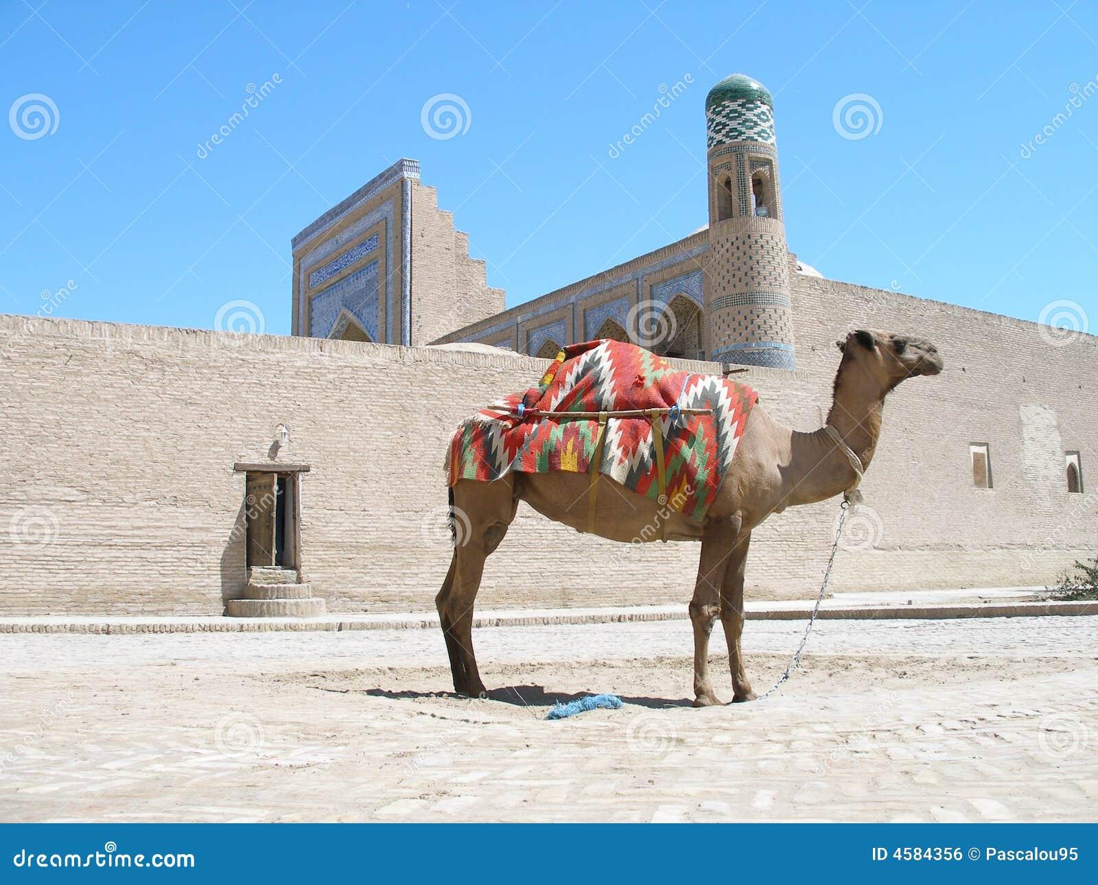 Khiva uzbekistan верблюда