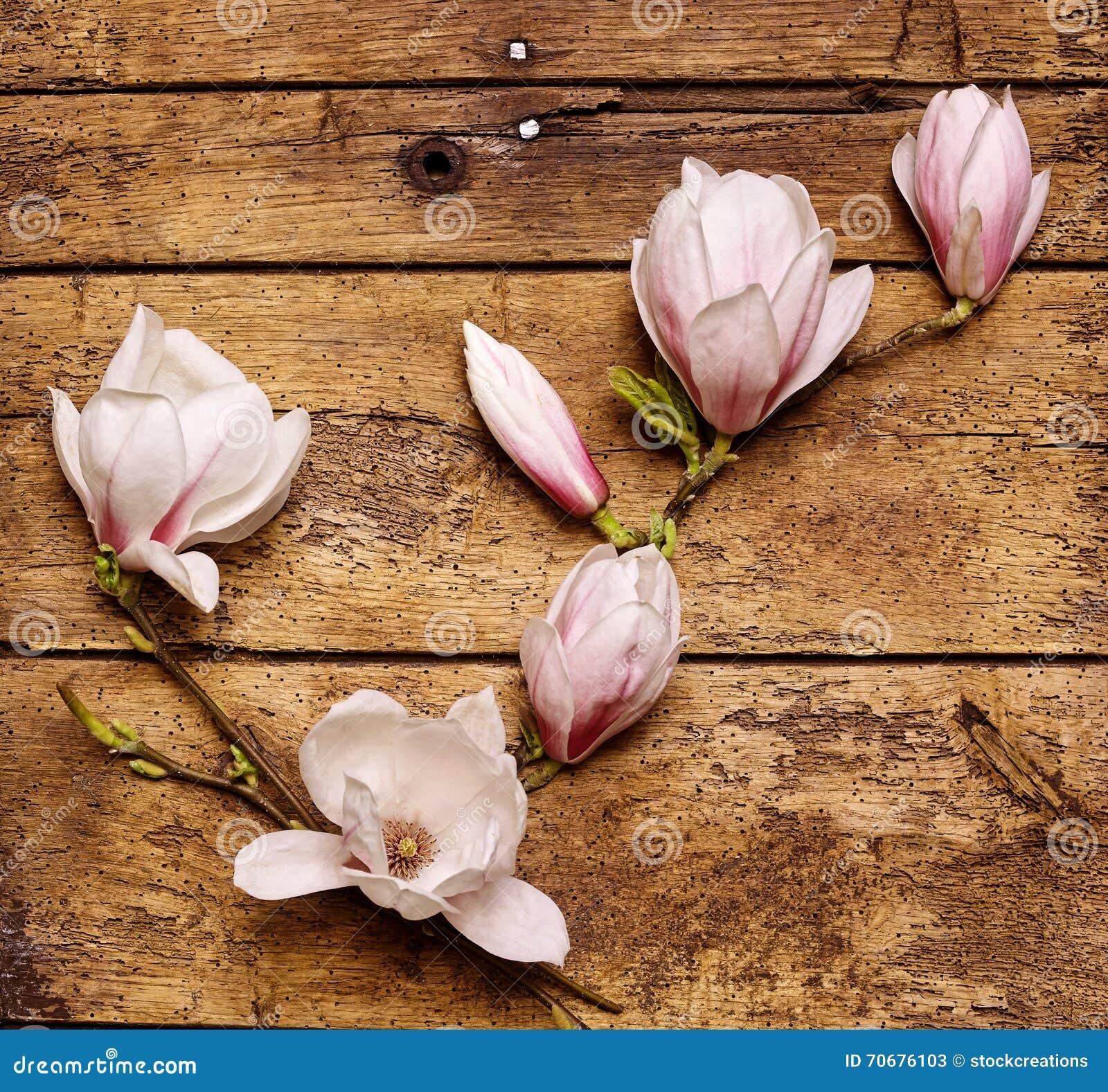 Kiść filigranowe świeże różowe magnolie