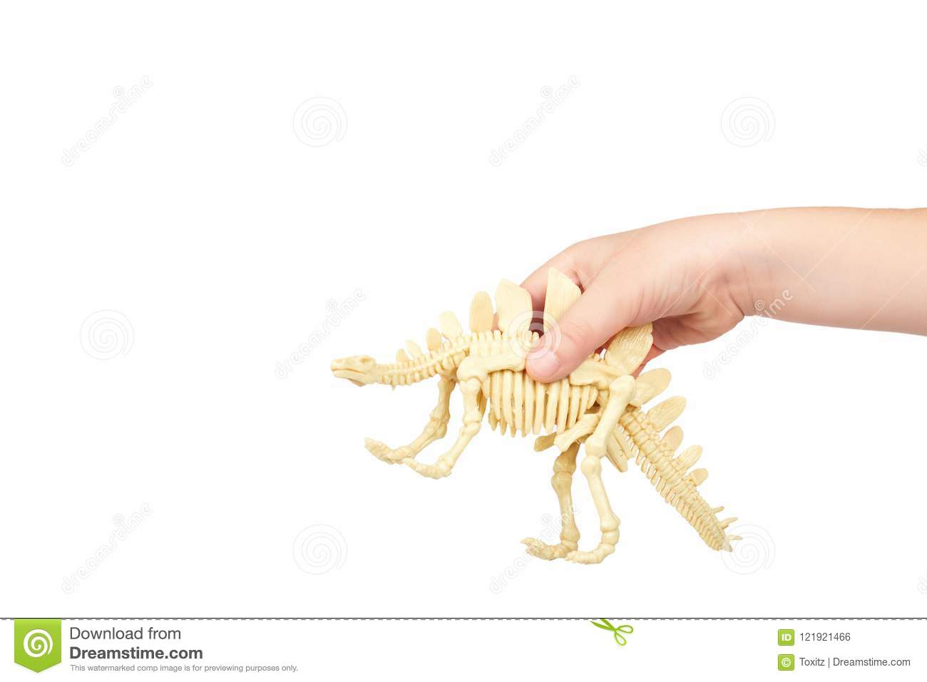 Kid Hand Hold Dinosaur Skeleton Toy Isolated On White Background Copy Space Template