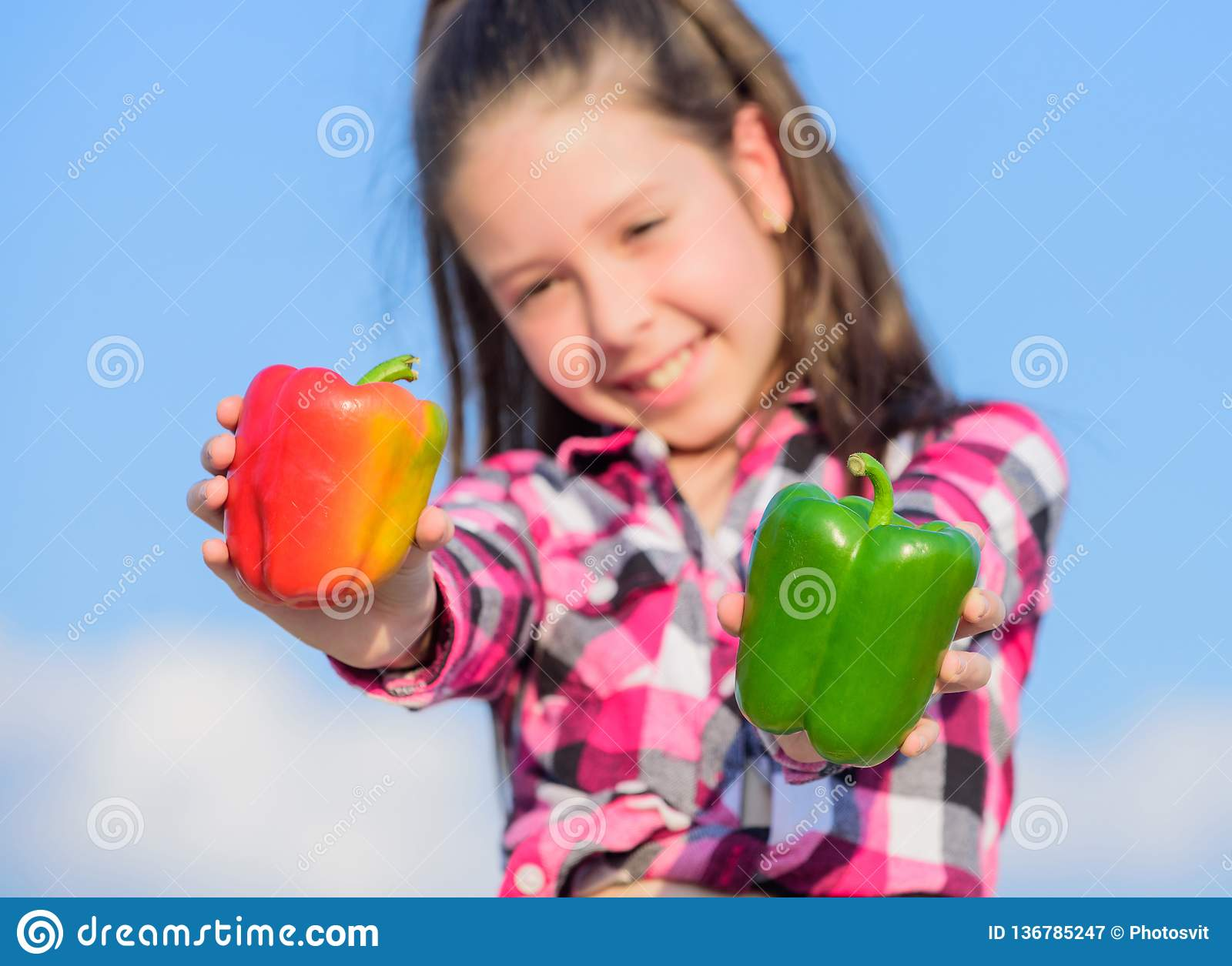 Kid hold ripe pepper harvest. Child presenting kinds of pepper. Fall harvest homegrown vegetables. Choose which. Kid