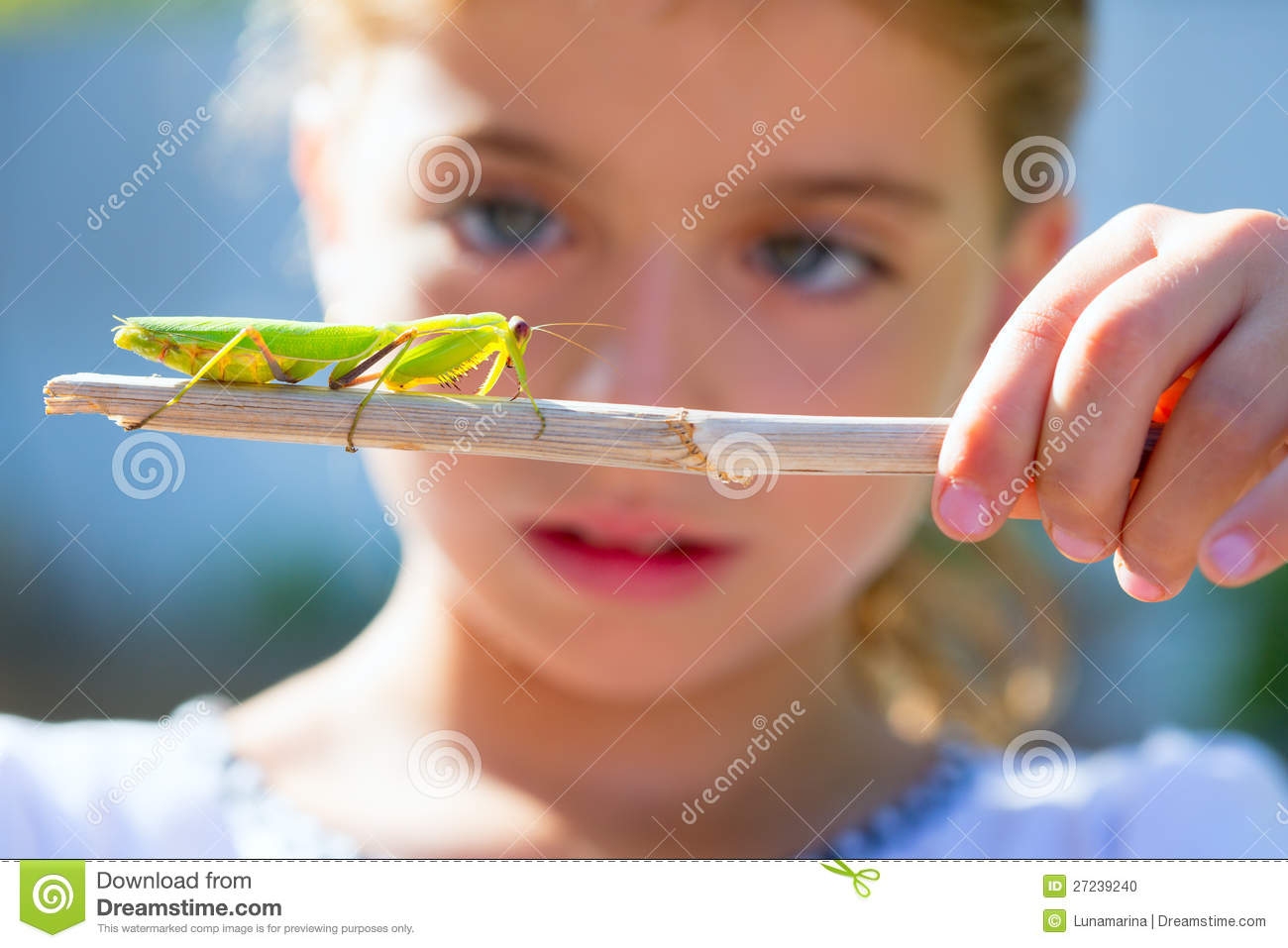 Kid small girl looking praying mantis
