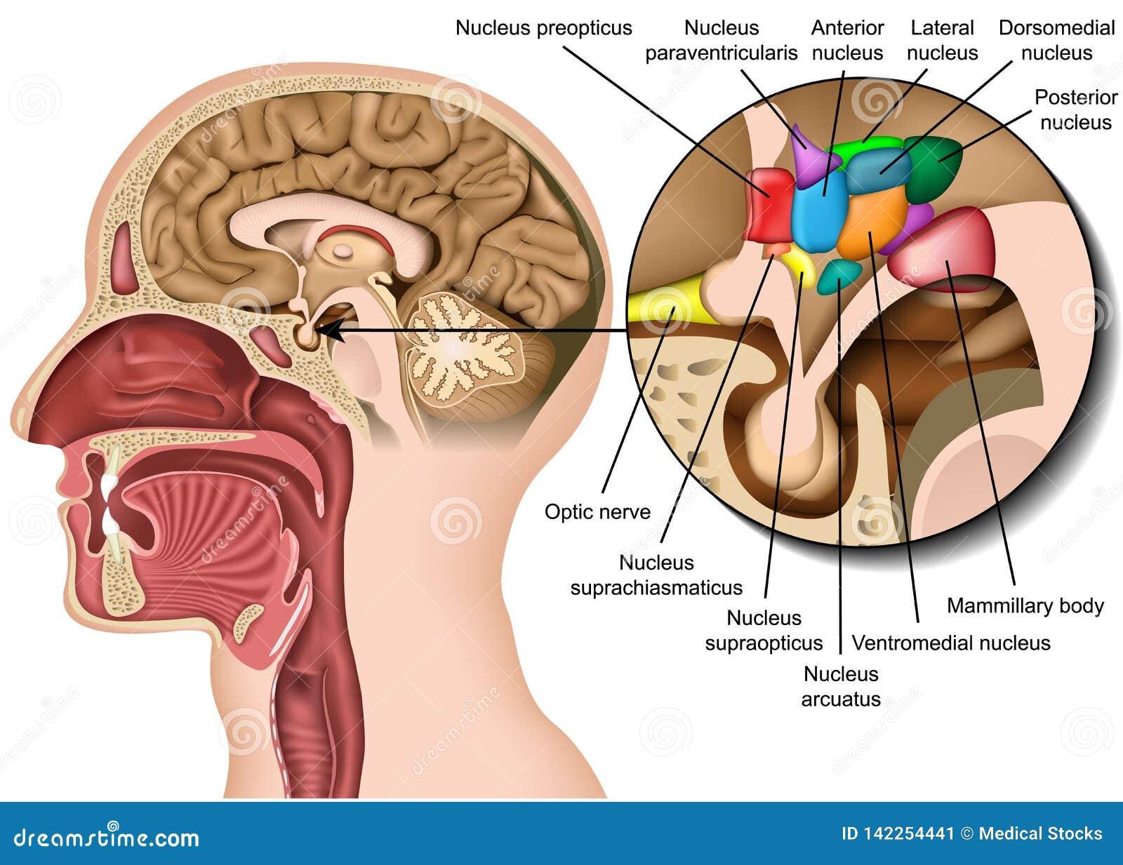 Kidney stones medical 3d vector illustration on white background