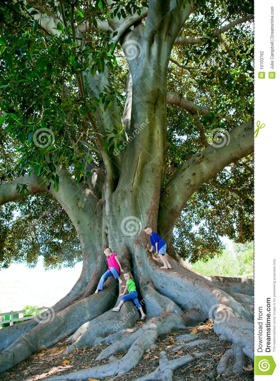Three Children In Bright Colored T shirts Climb A Very Large Oak Tree