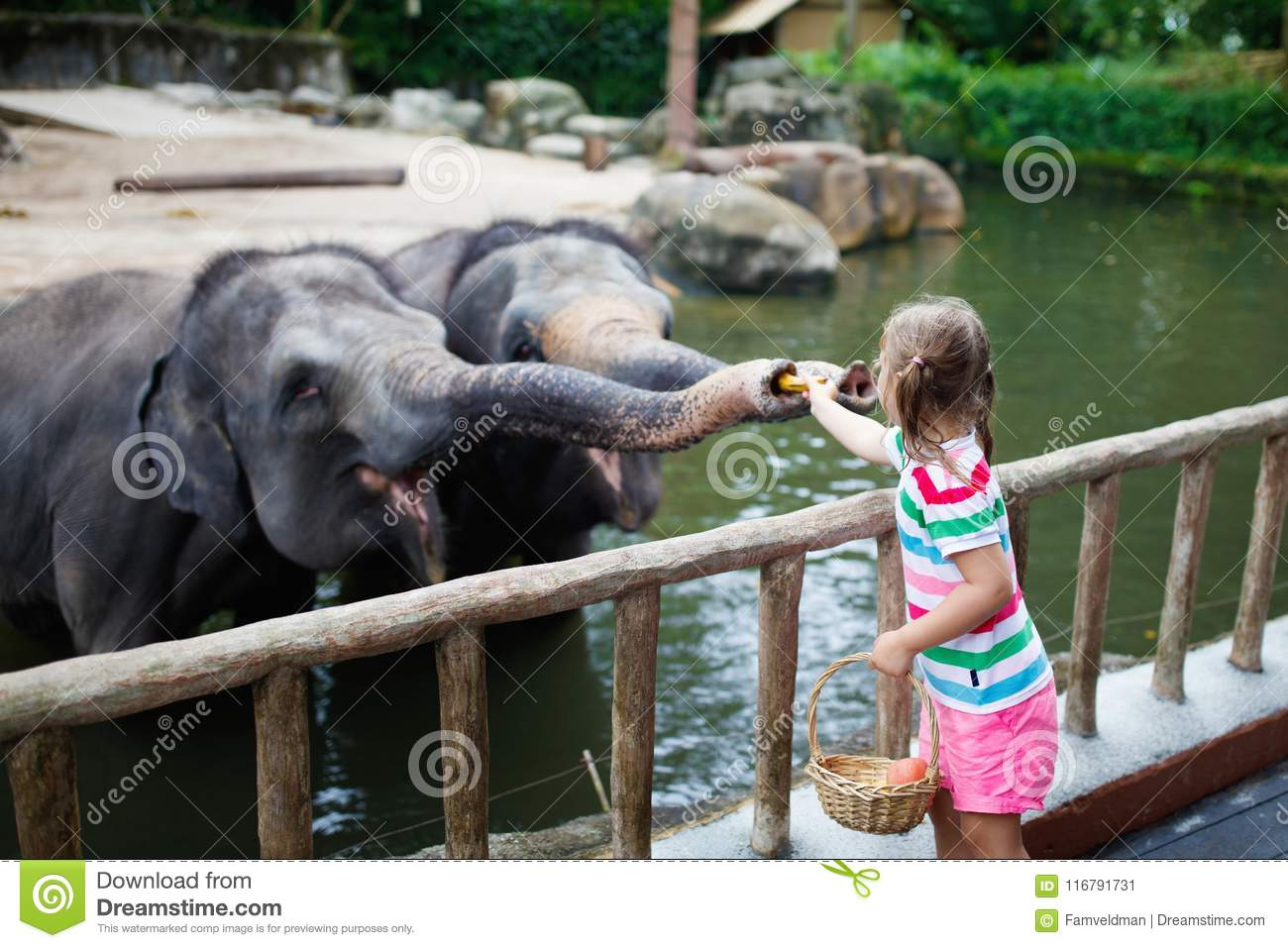 Kids feed elephant in zoo. Family at animal park.