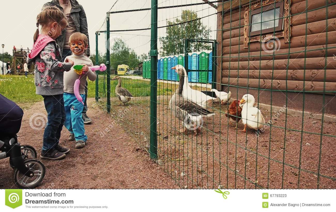 Kids Feeding Geese And Ducks In Aviary Behind The Green Fence. Zoo ...
