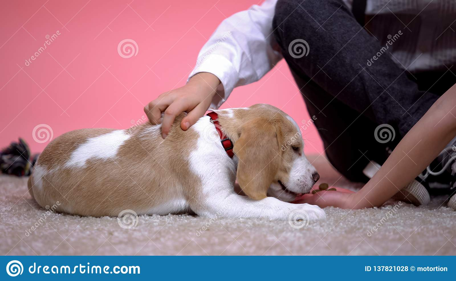 Kids petting and feeding beagle puppy, family pet, birthday gift for children