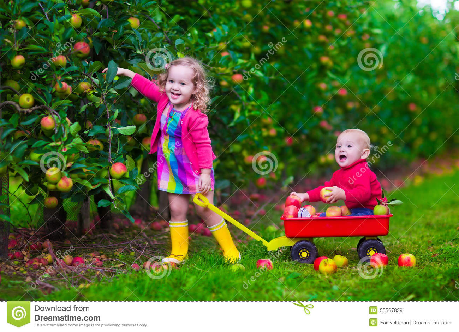 Kids picking apple on a farm