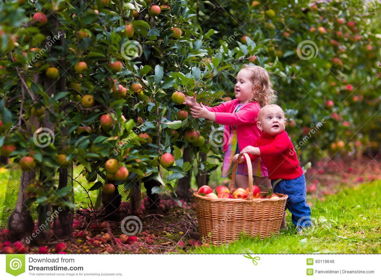 kids picking apples from tree stock photo image of