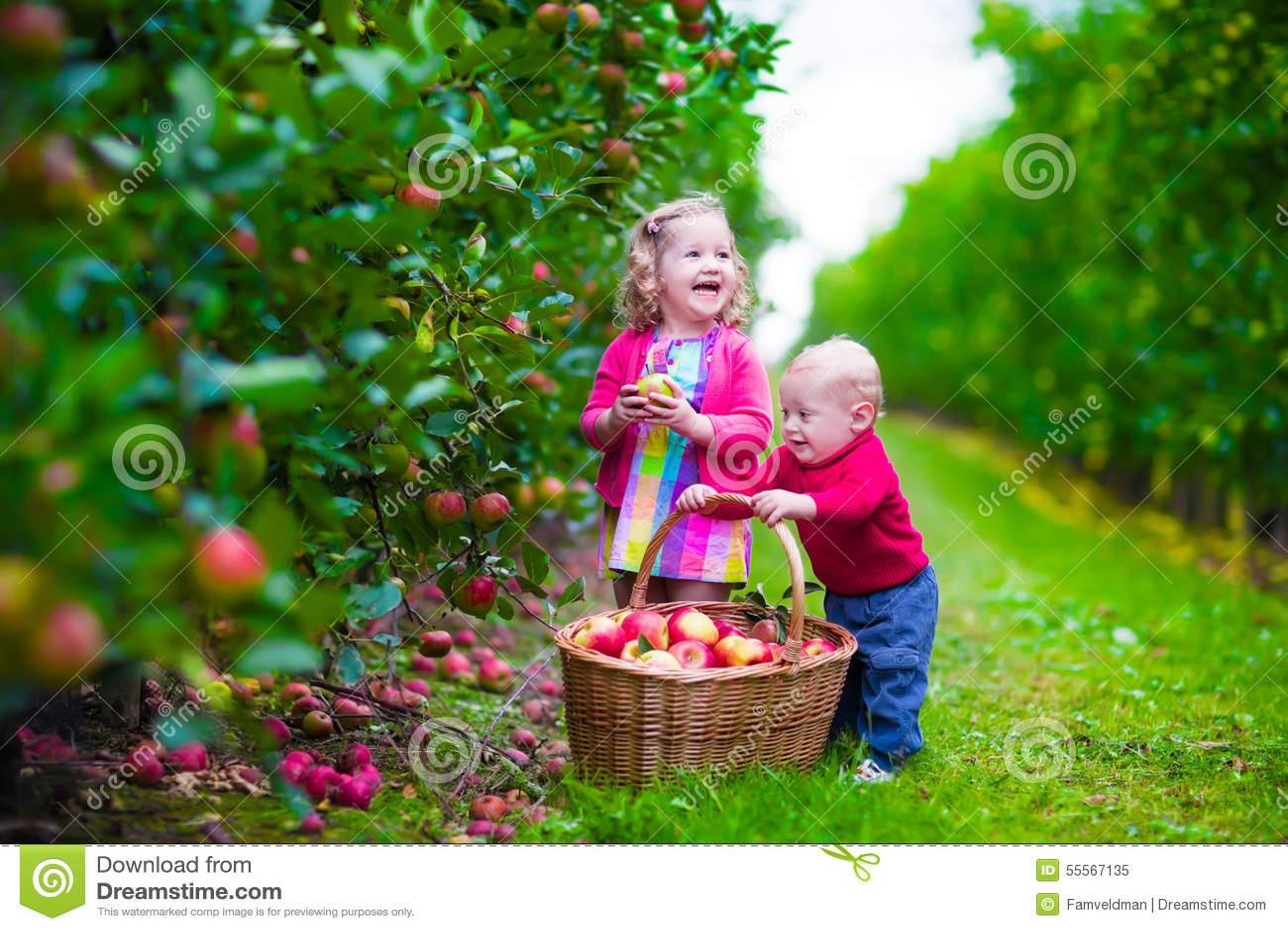 kids picking fresh apple on a farm - Kids Pic Download