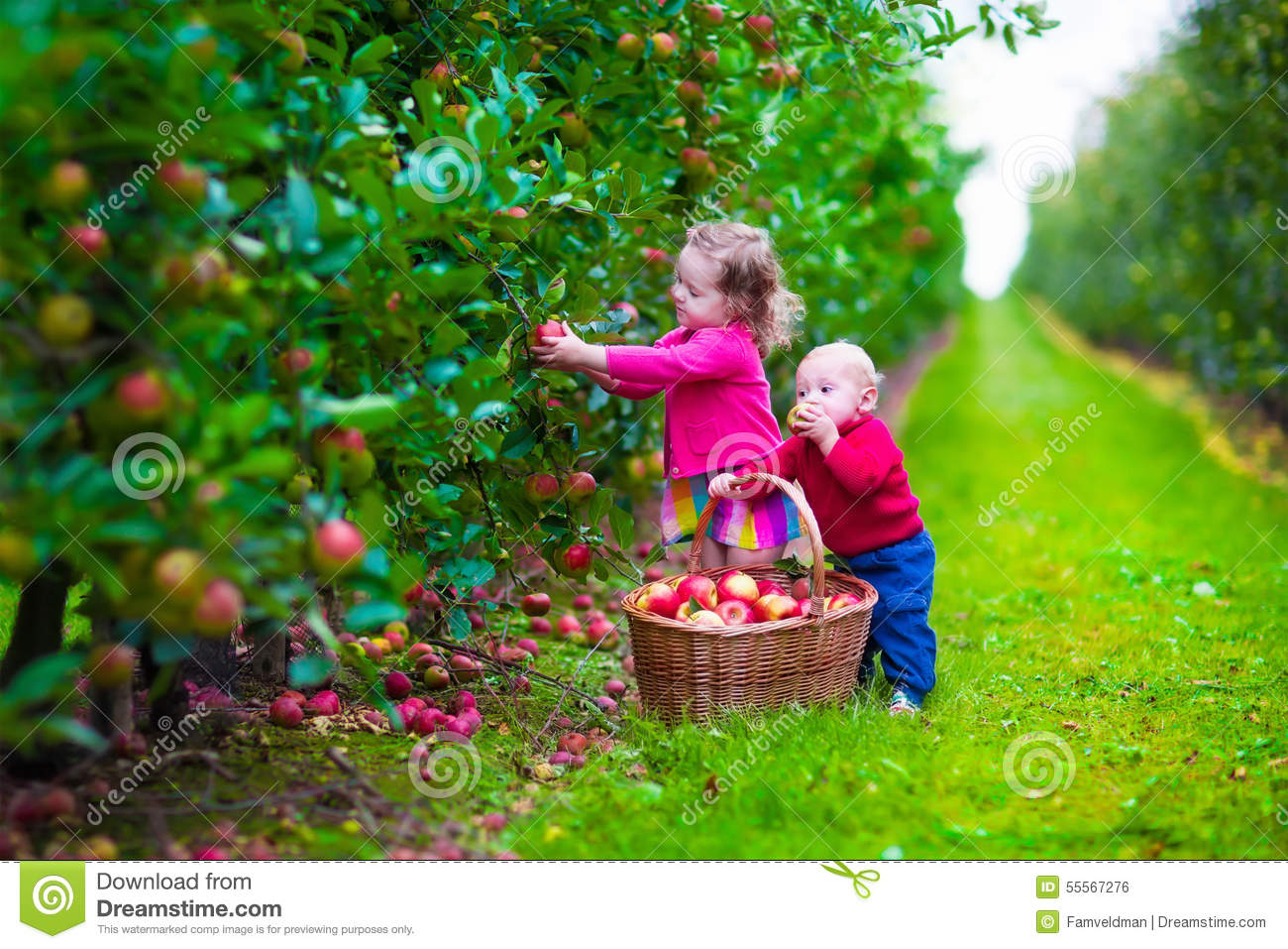 Child picking apples on a farm in autumn little girl and boy play in