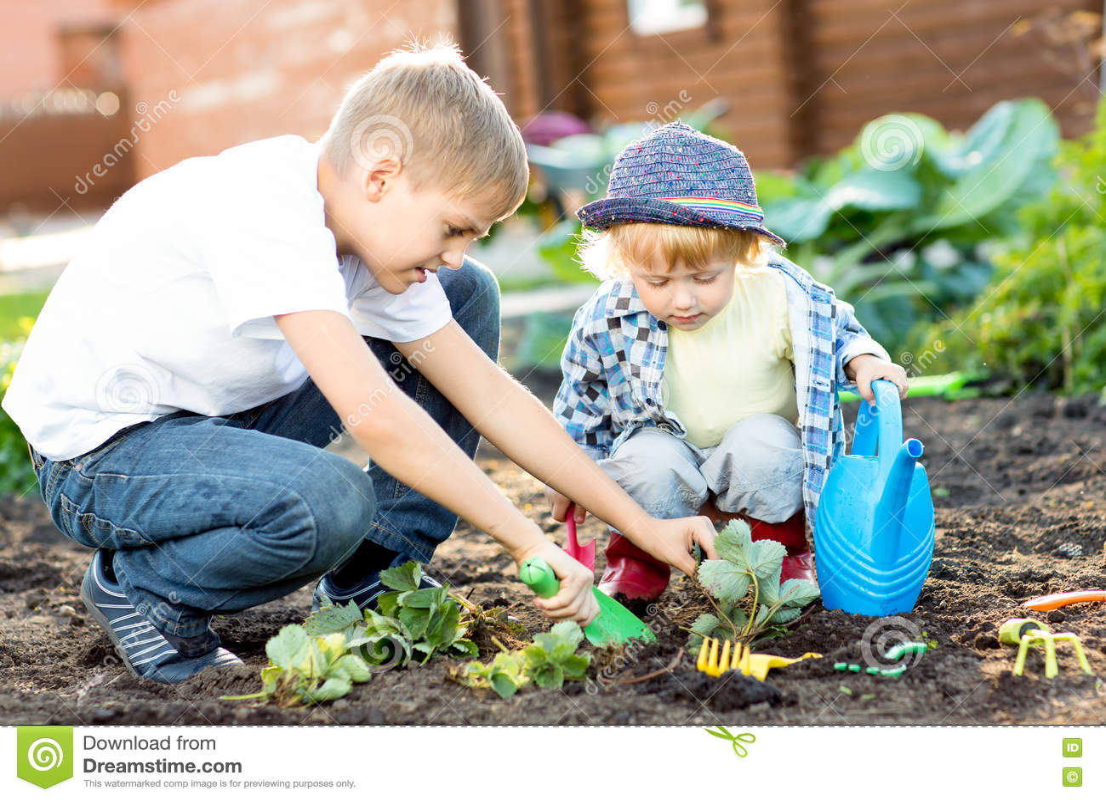 Kids planting strawberry seedling into fertile soil outside in garden