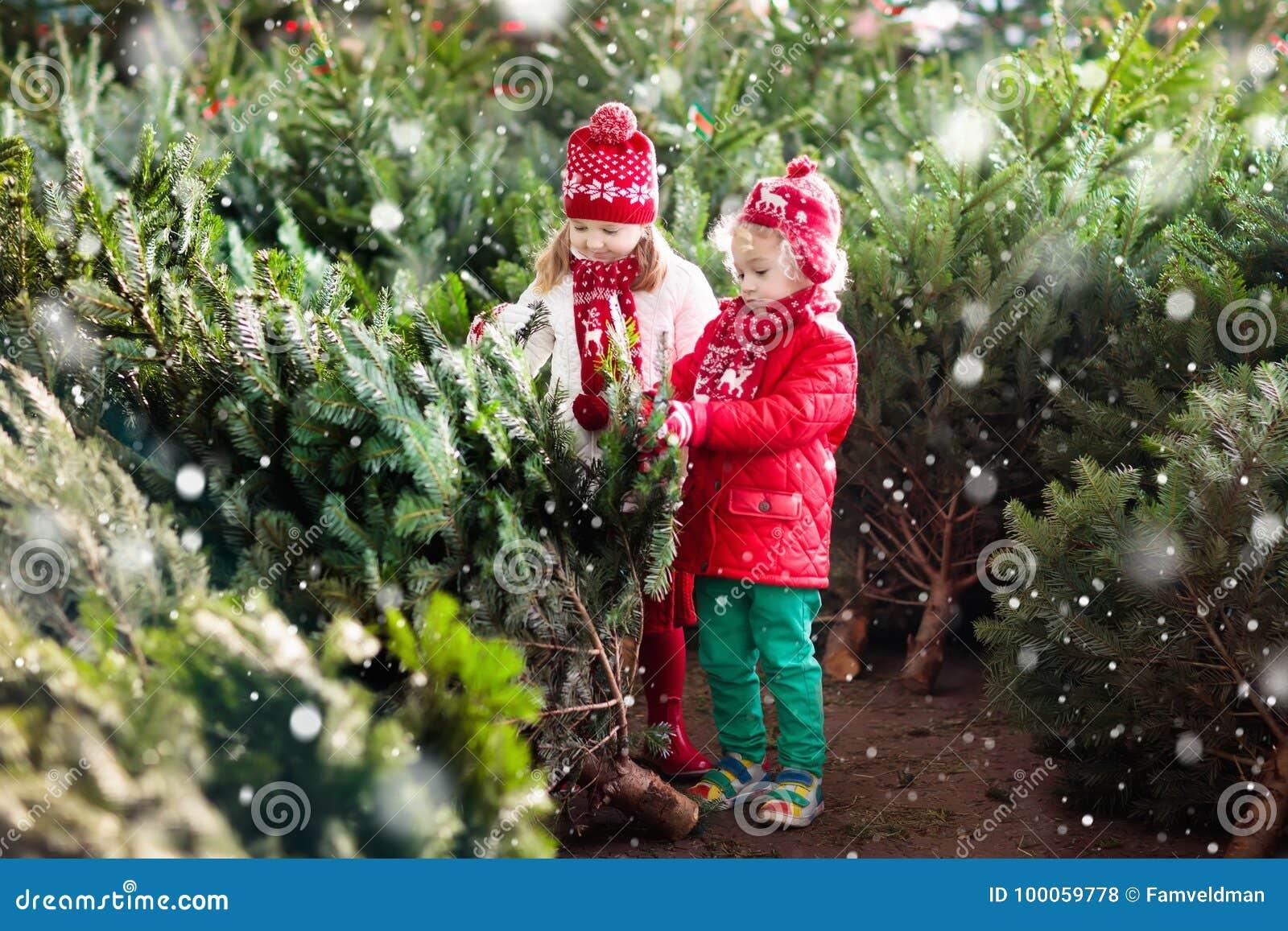 Kids Select Christmas Tree. Family Buying Xmas Tree. Stock Photo ...