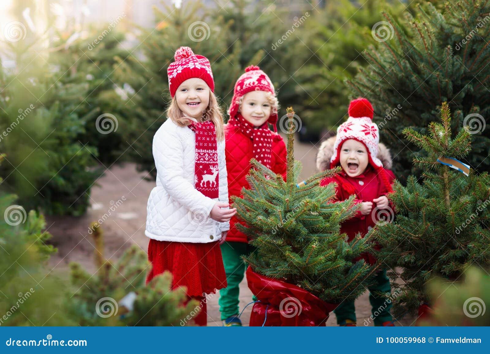 Kids Selecting Christmas Tree. Xmas Gifts Shopping. Stock Photo ...