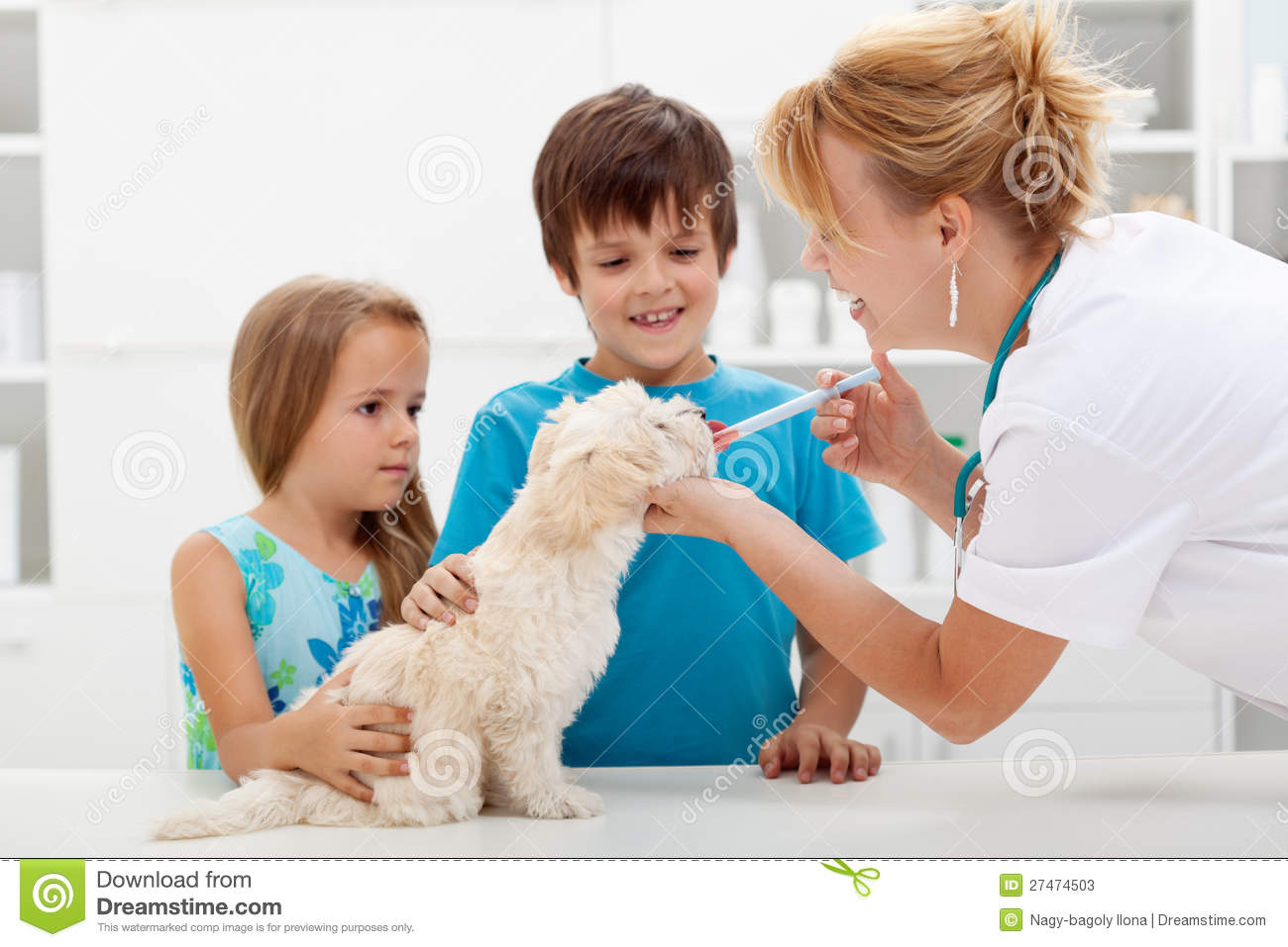 kids with their pet at the veterinary doctor   fluffy dog receiving