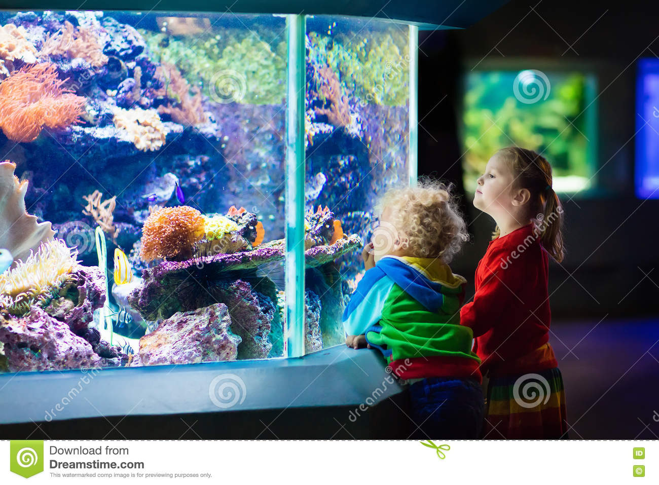Kids Watching Fish In Tropical Aquarium Stock Photo
