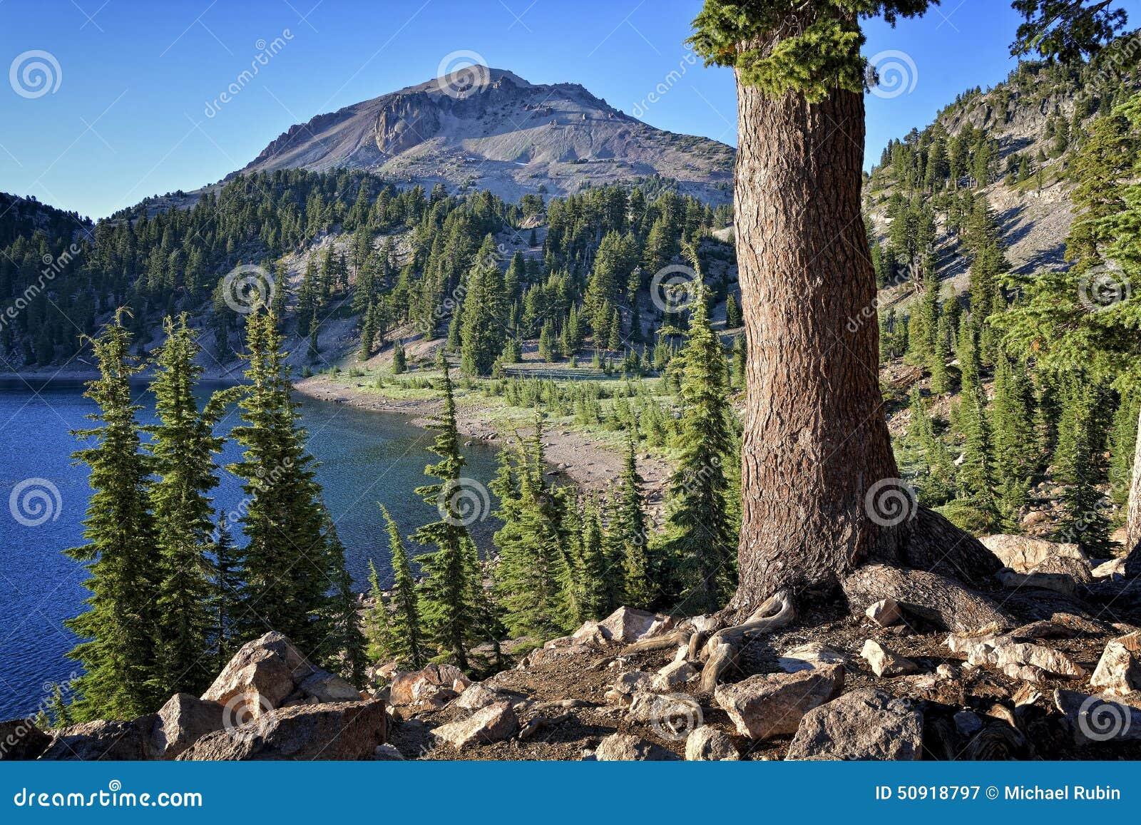 Kiefer, See Helen und Lassen-Spitze, vulkanischer Nationalpark Lassens