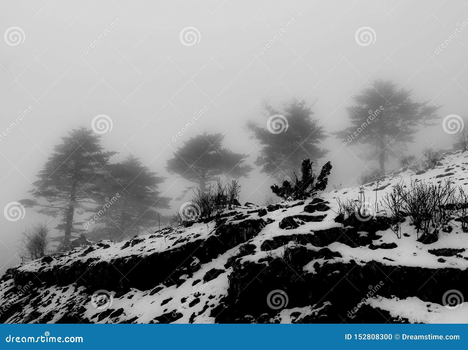 Kiefernwald im Winter und im Schnee