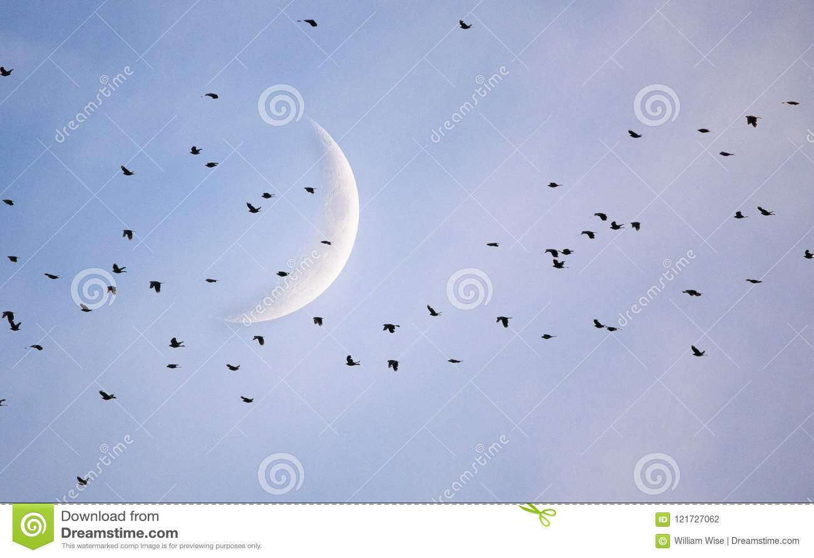 Kierdel kos przecinająca półksiężyc księżyc Ateny, dziąsła