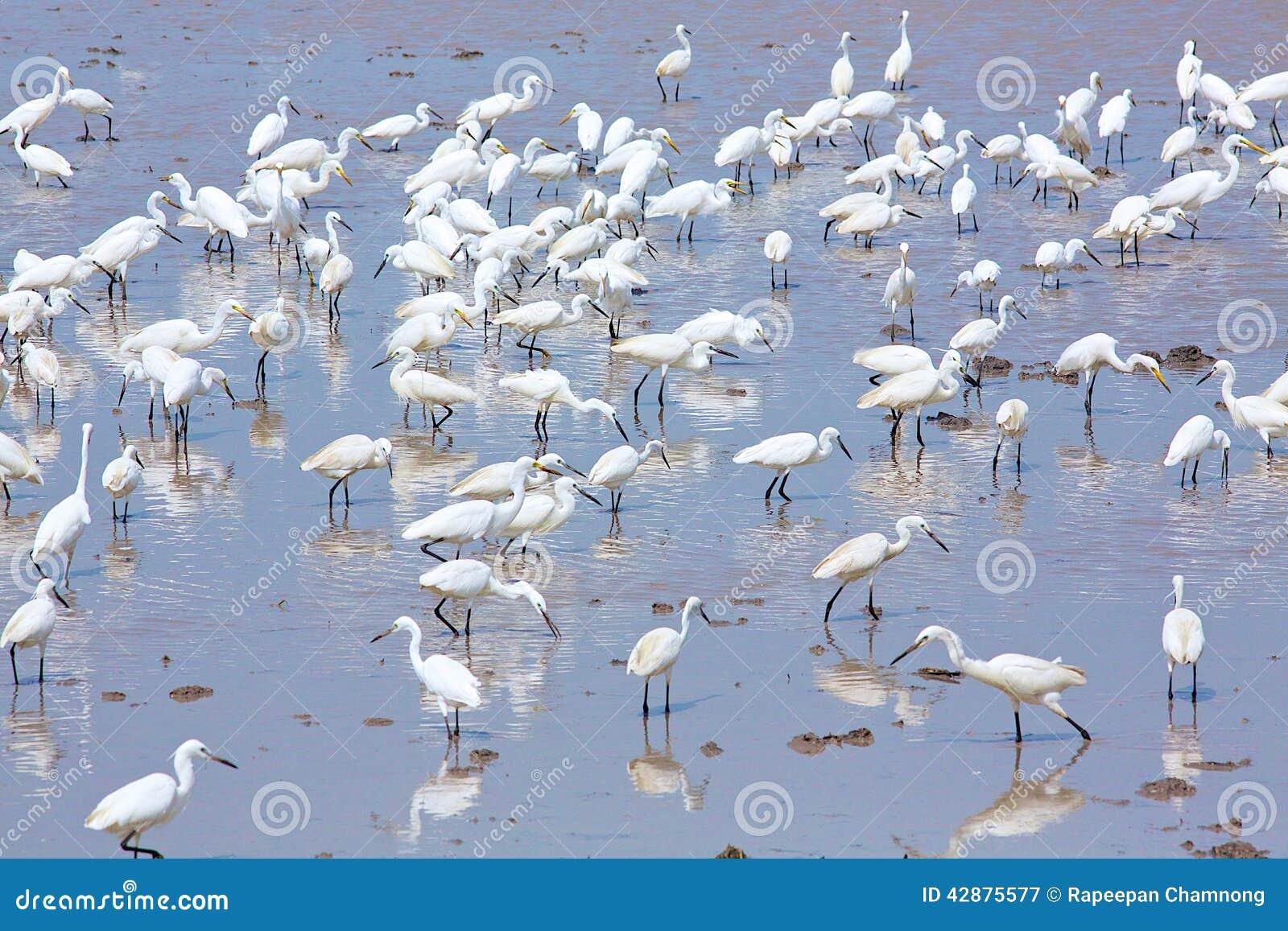 Kierdel ptaki