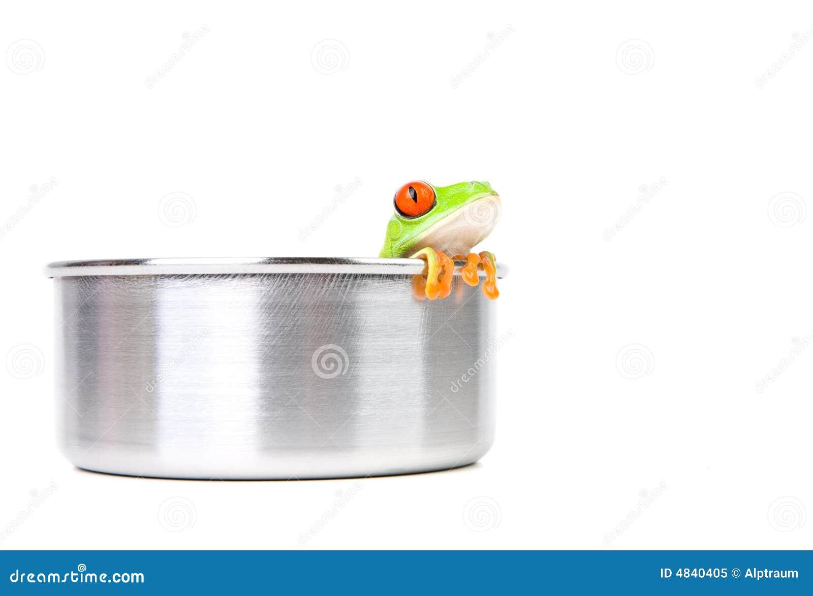 Kikker bij het koken van pot