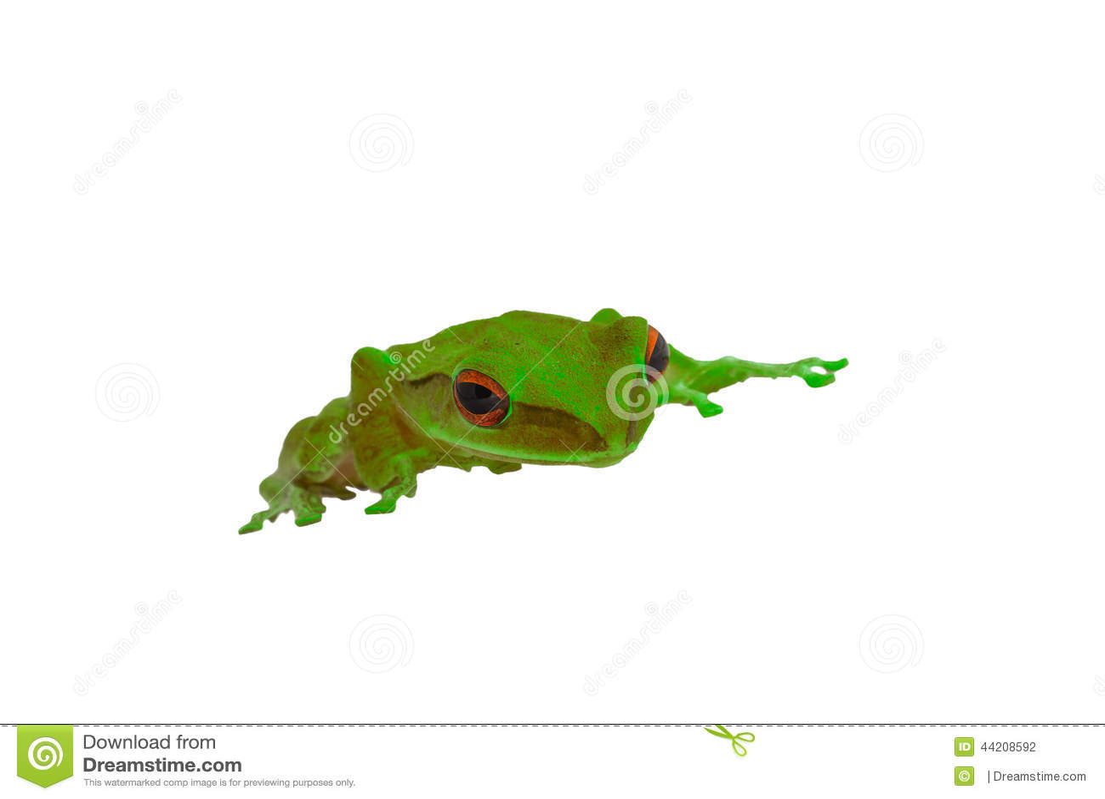 Groene kikker rode ogen stock foto's– 46 groene kikker rode ogen ...
