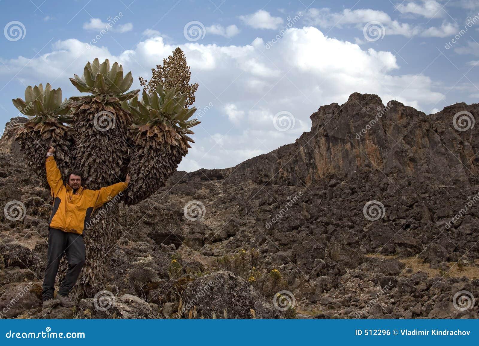 Kilimanjaro 010