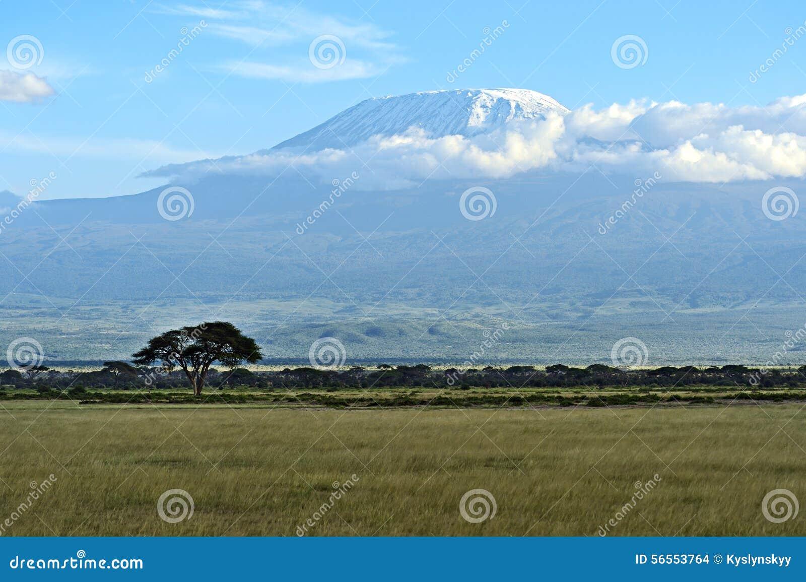Download Kilimanjaro στοκ εικόνες. εικόνα από άγριος, επικολλήστε - 56553764
