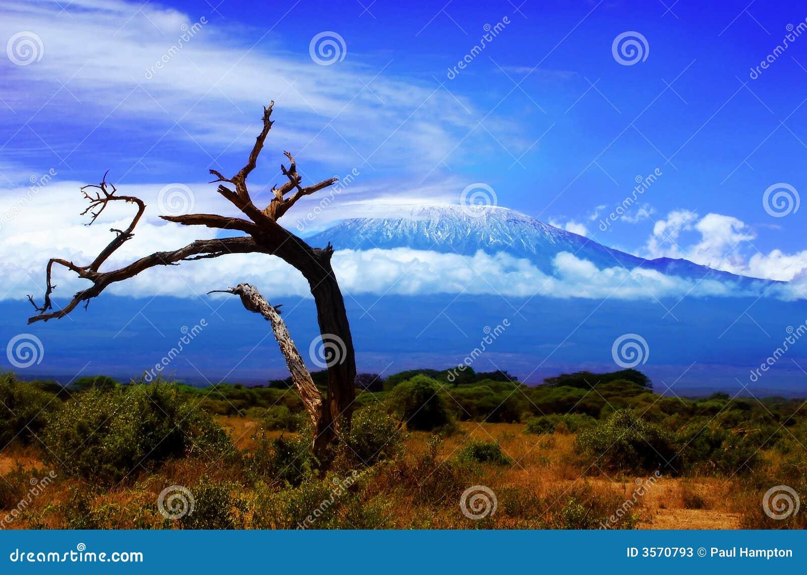 Kilimanjaro Baum-Ansicht