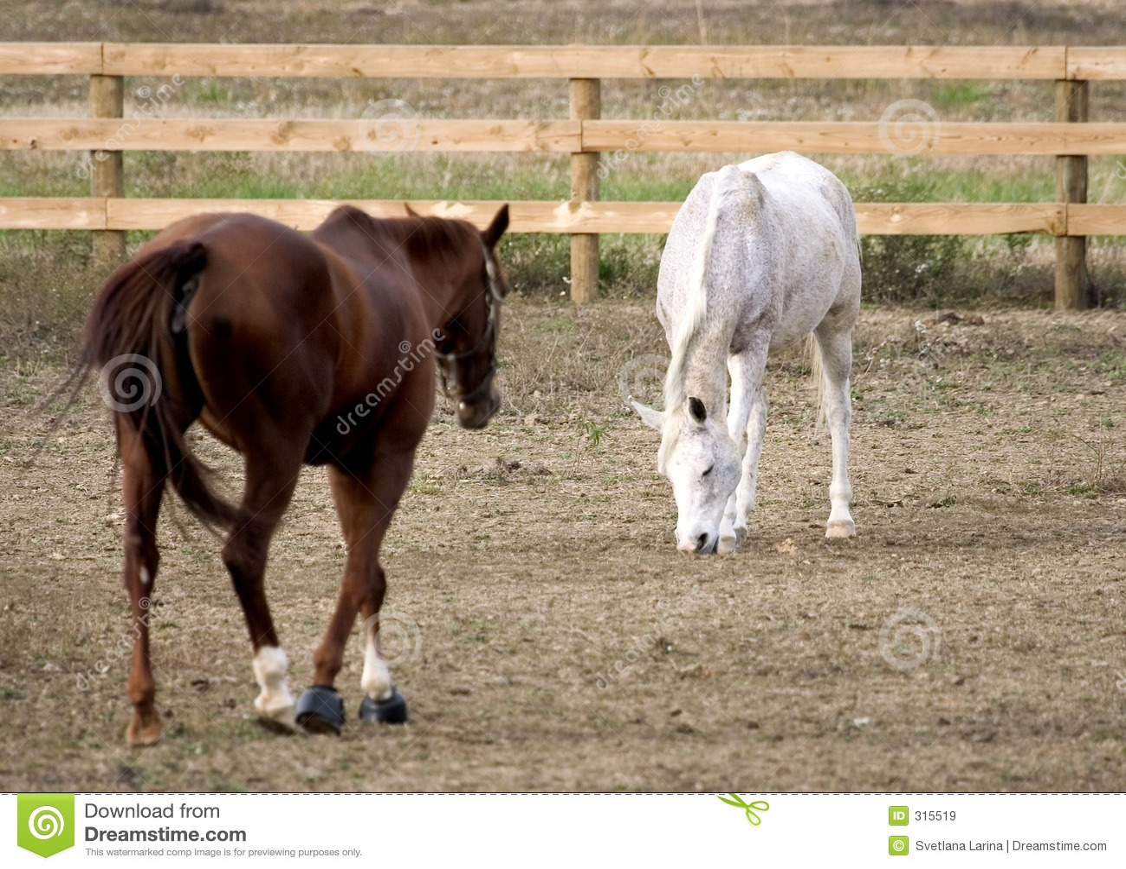 Kilka koni