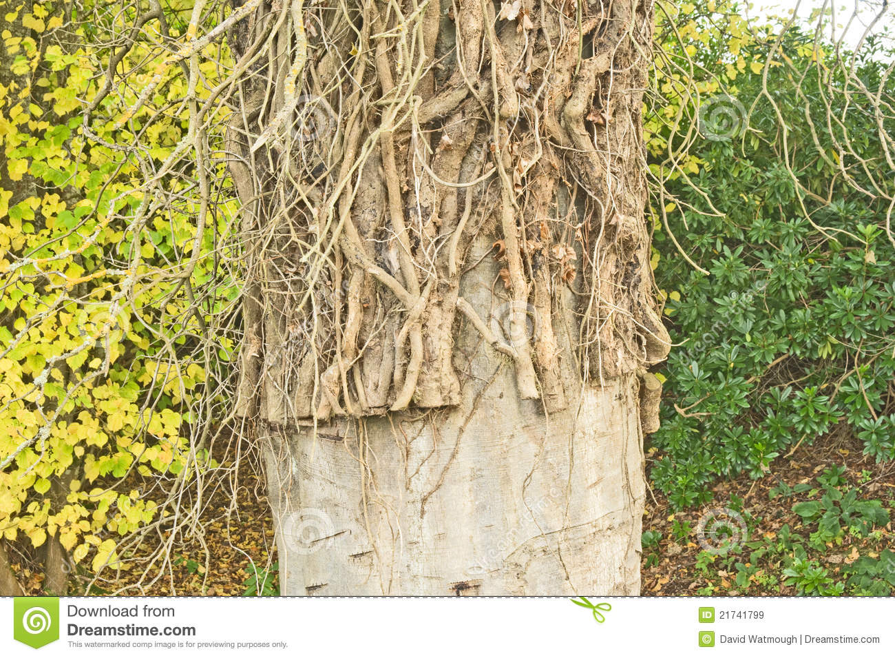 How to Kill Ivy Without Damaging a Tree How to Kill Ivy Without Damaging a Tree new pics