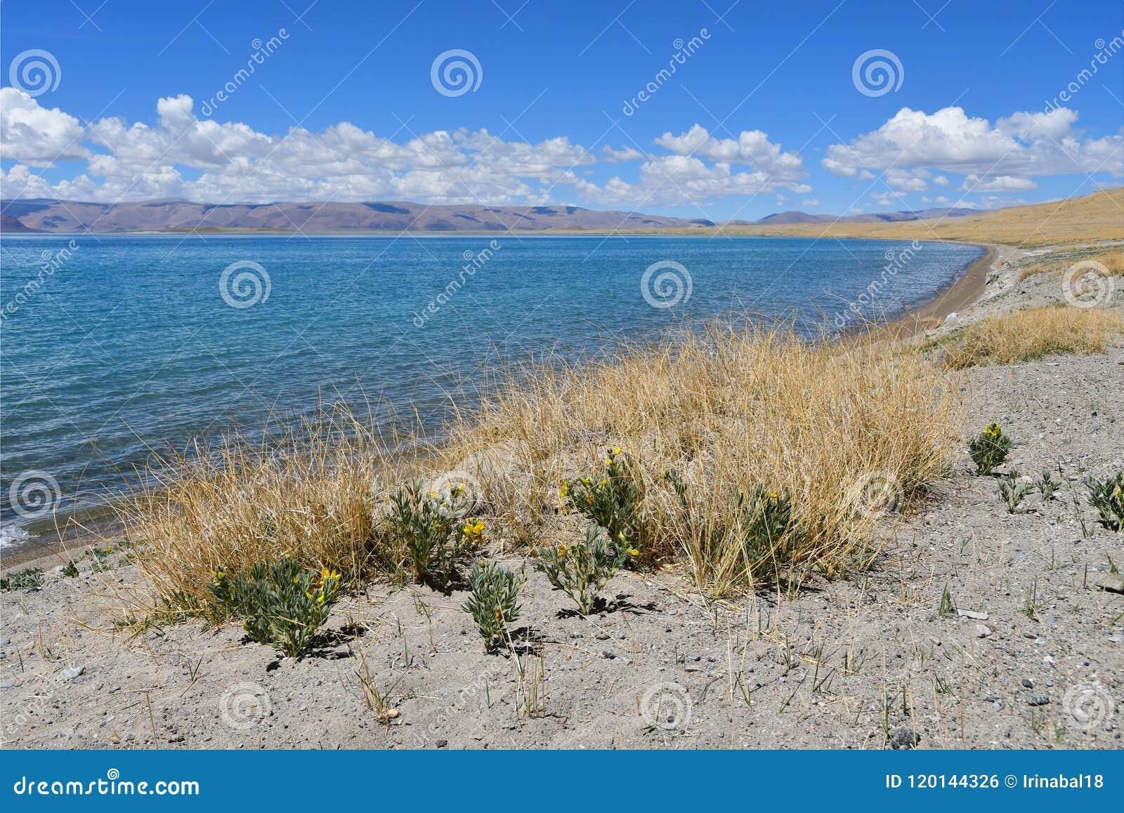 Kina Great Lakes av Tibet Sjö Teri Tashi Namtso i sommardag