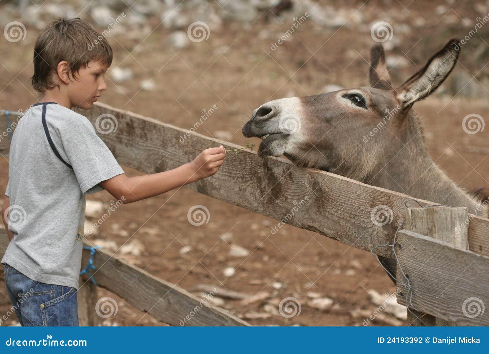 Kind en ezel