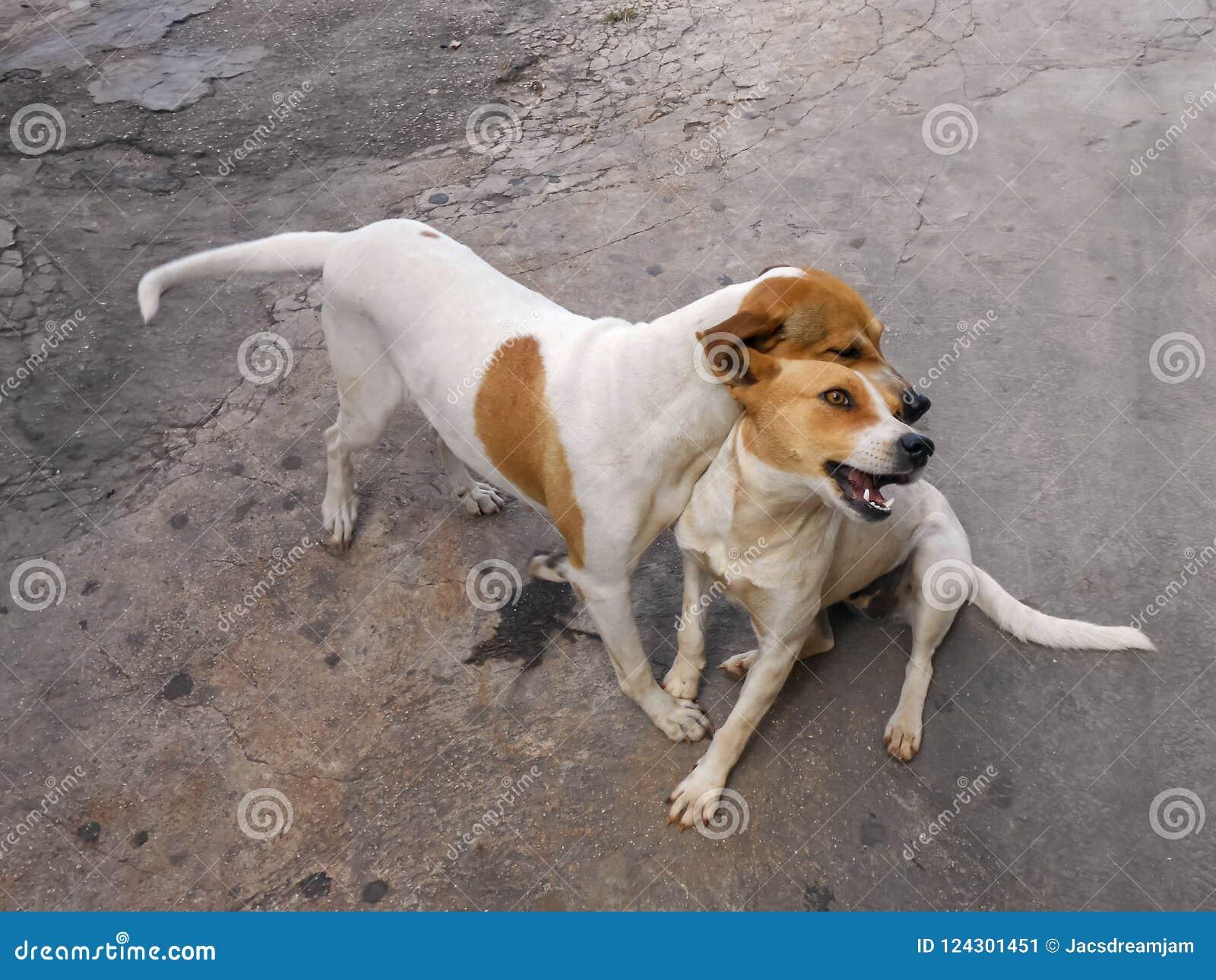 Kind för hund` s som är fräck mot kamratskap