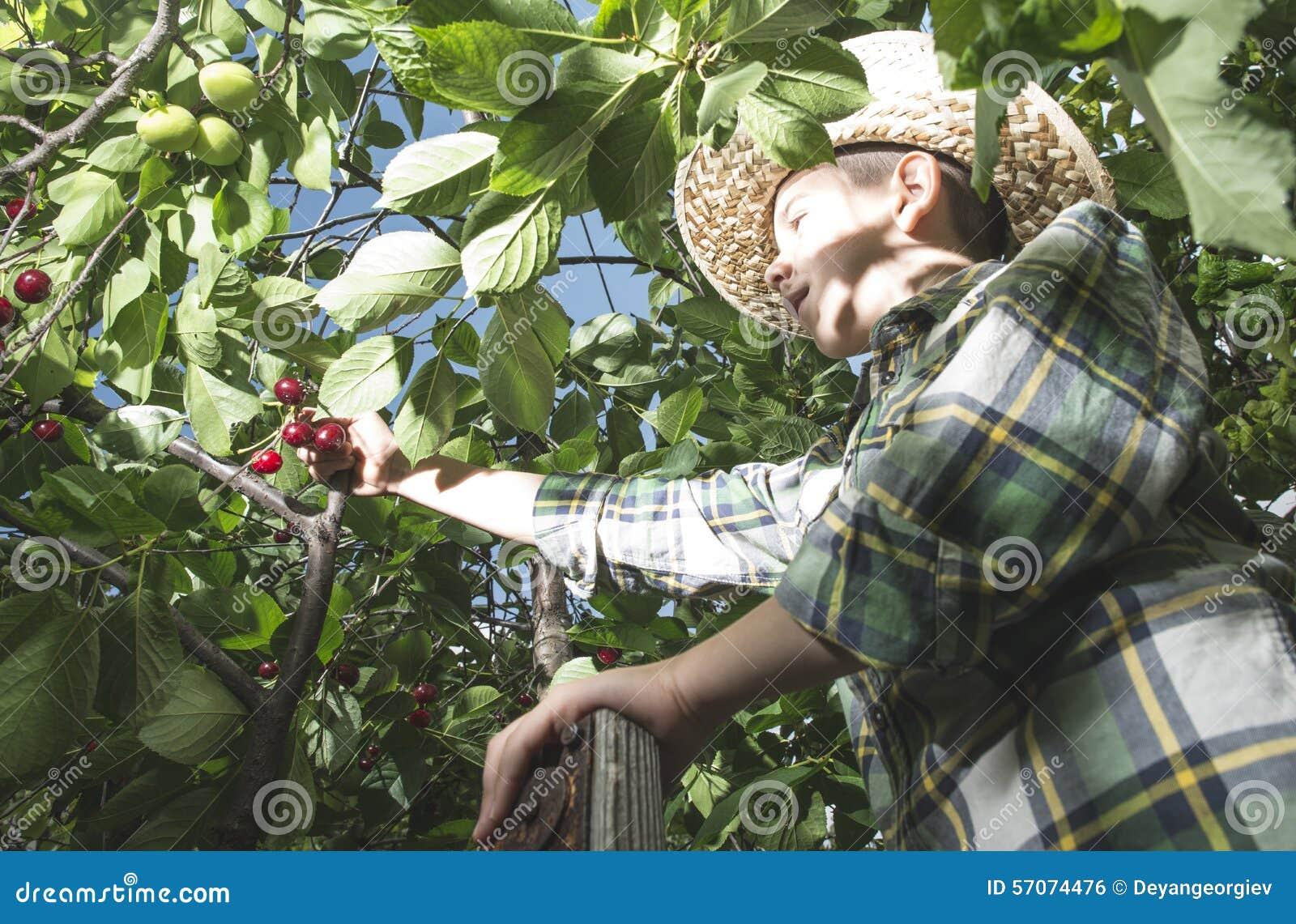 Kind het oogsten Morellen